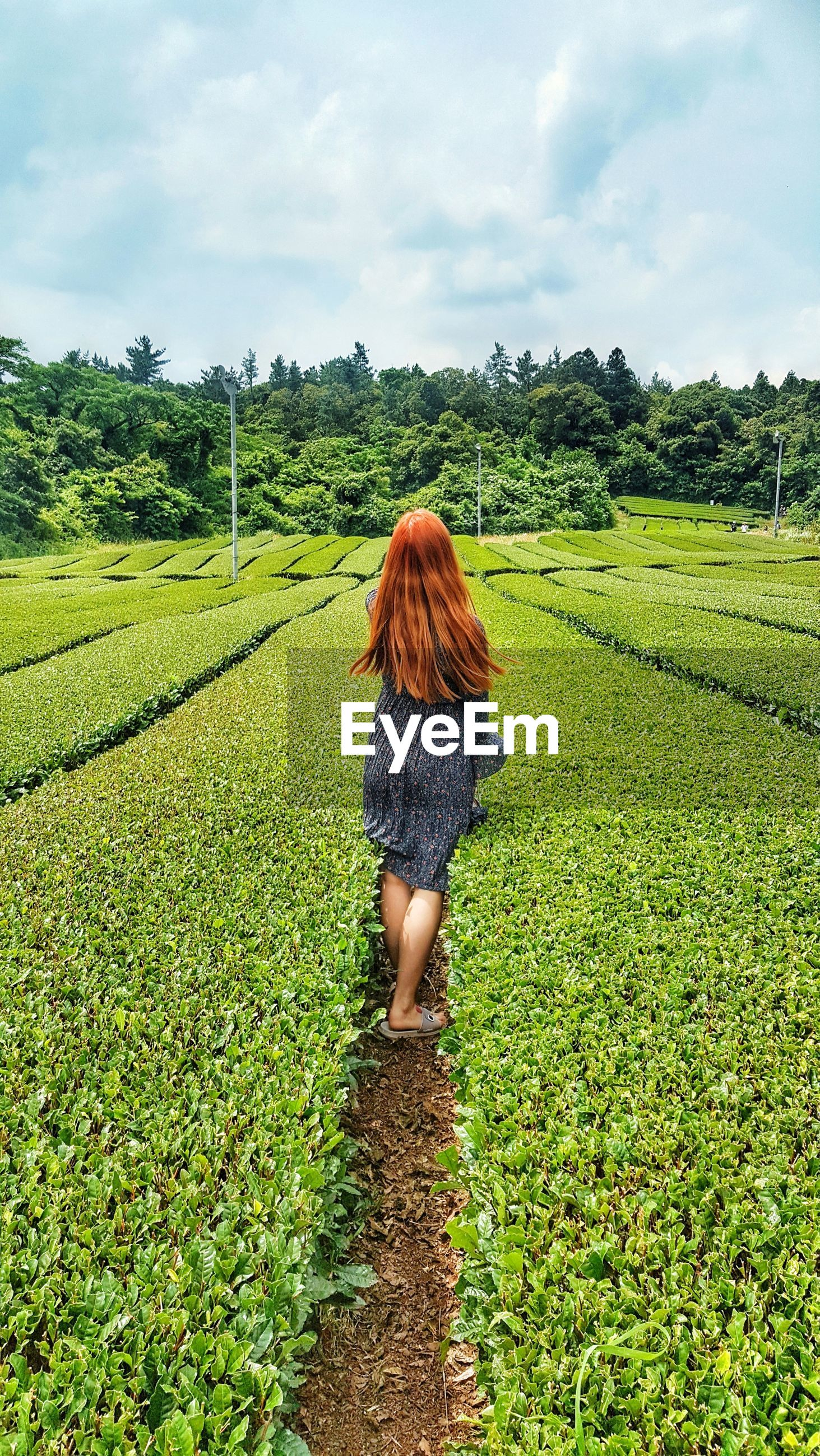 Rear view of woman standing amidst tea crop on farm