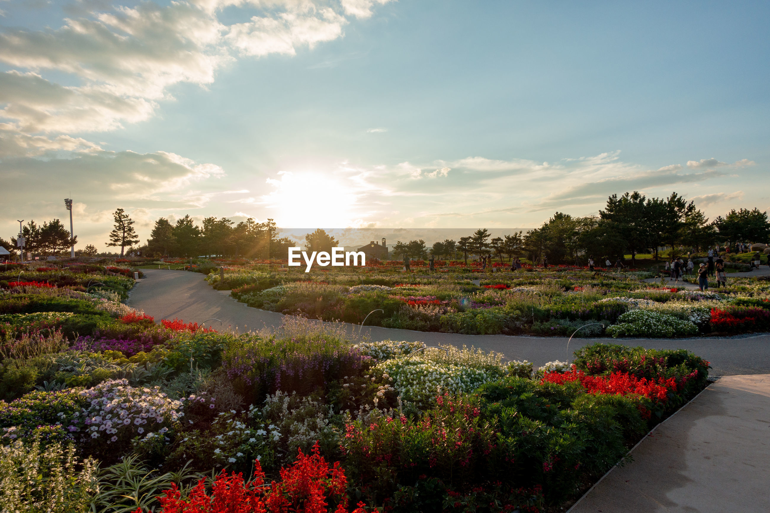 SCENIC VIEW OF FLOWERING PLANTS AND TREES AT SUNSET