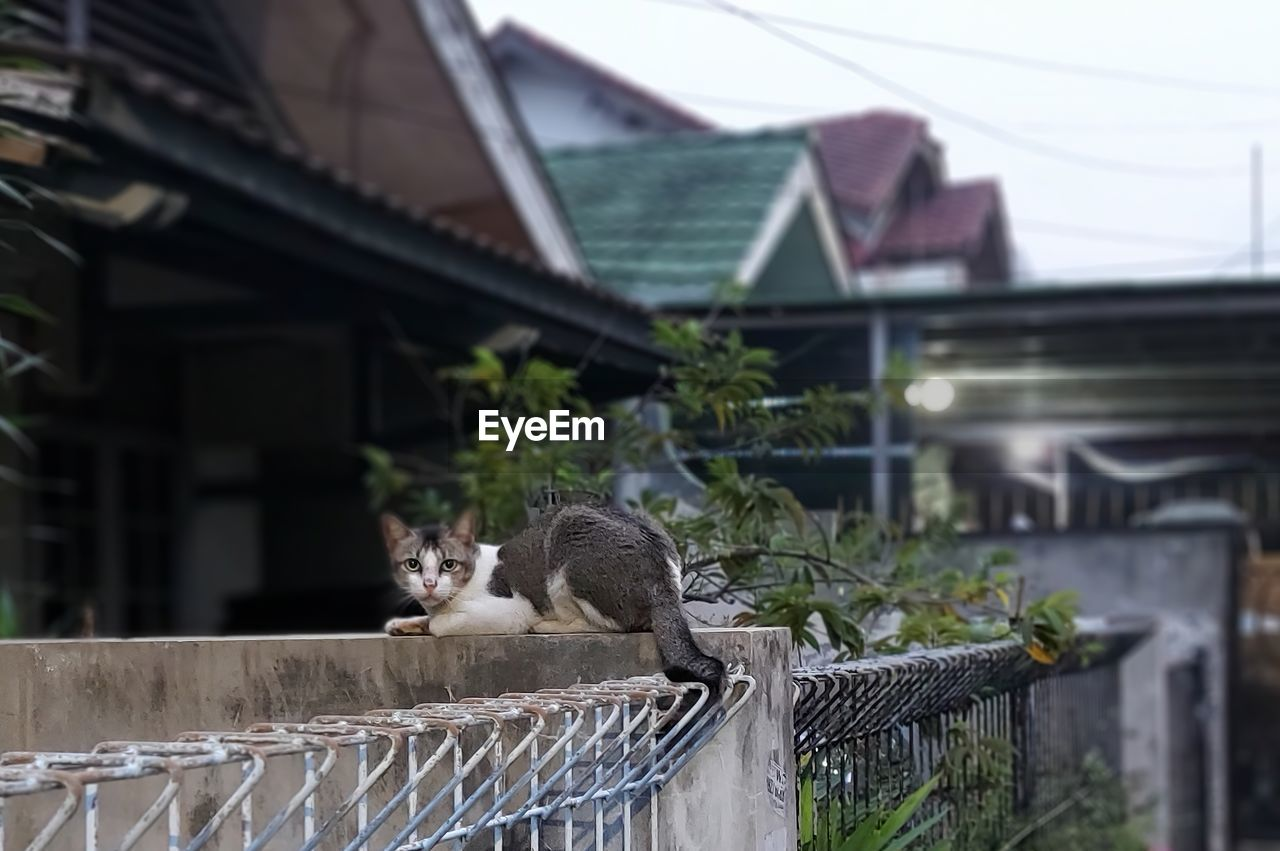 CAT LOOKING AWAY WHILE STANDING ON RAILING OF HOUSE