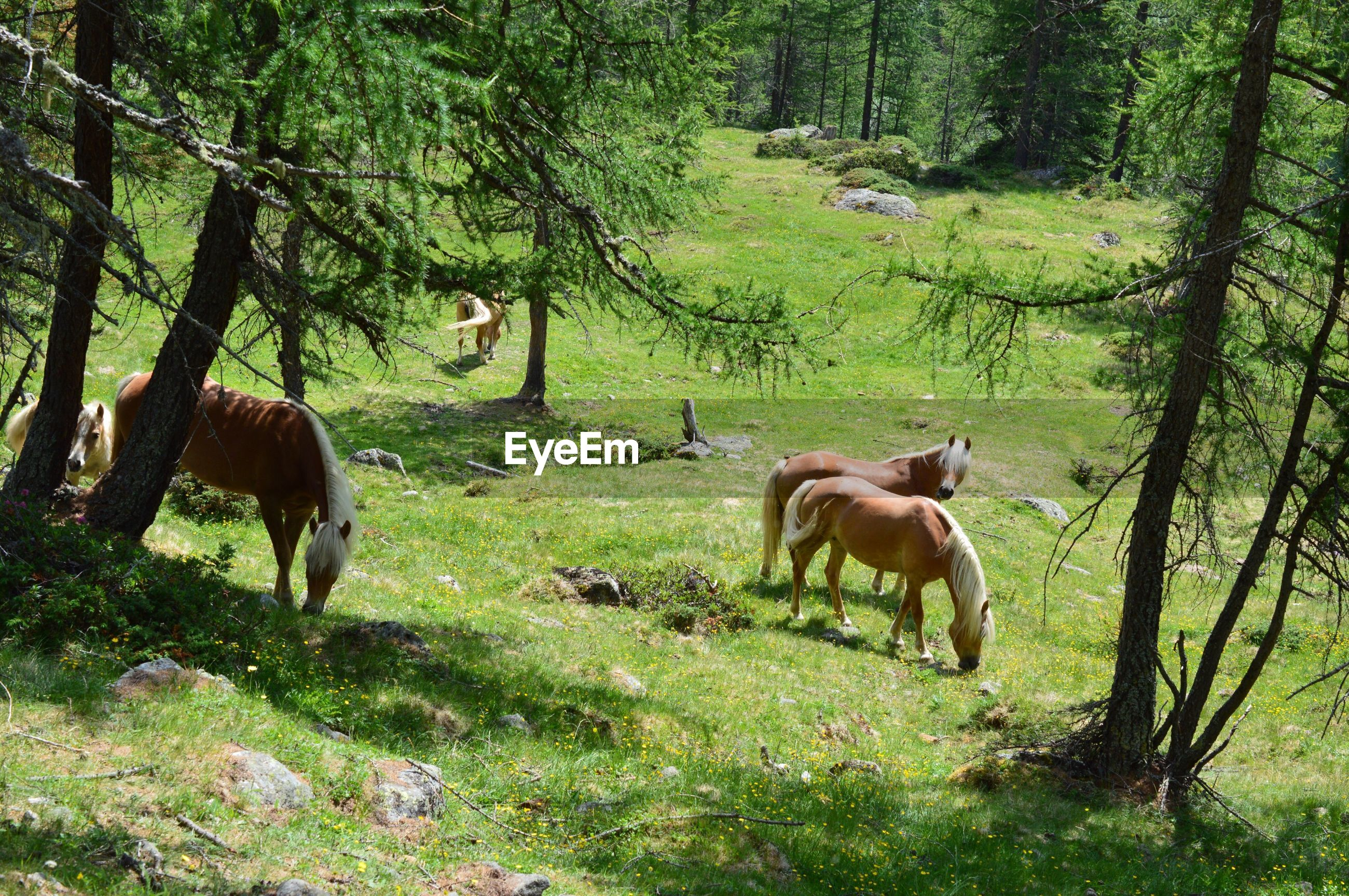 Horses standing in forest