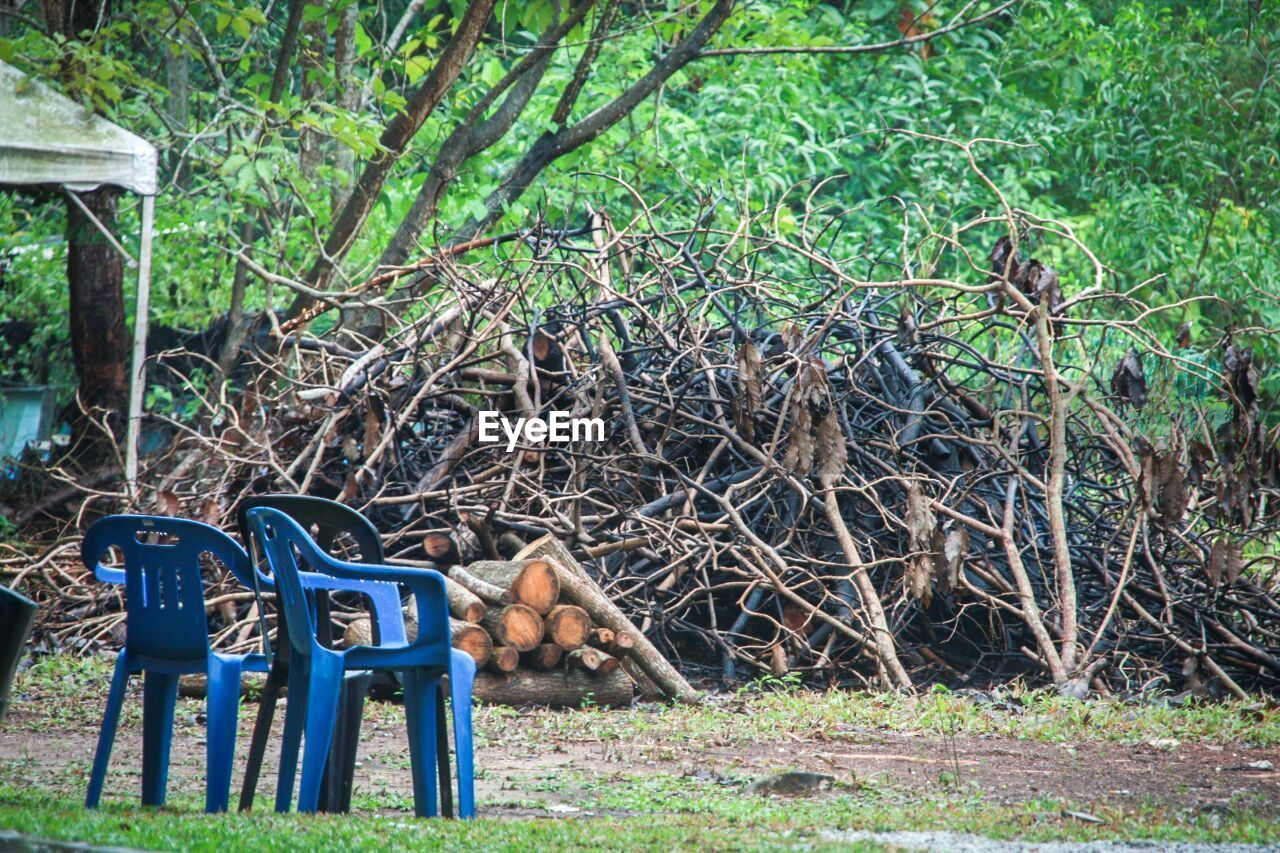chair, day, outdoors, plant, grass, sitting, no people, tree, nature, seat