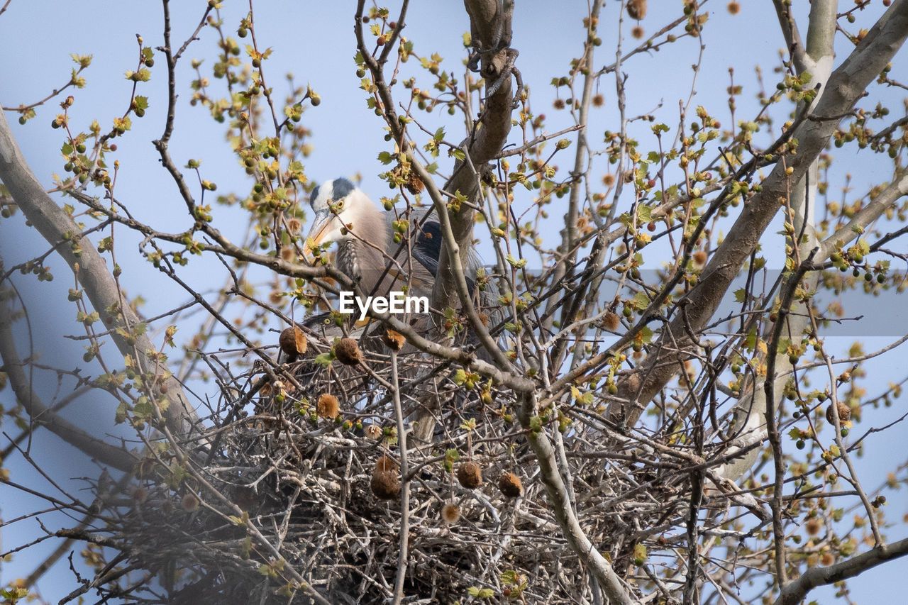 bird, tree, plant, animal themes, branch, animal, vertebrate, animal wildlife, animals in the wild, one animal, perching, nature, day, no people, sky, beauty in nature, low angle view, outdoors, selective focus, animal nest