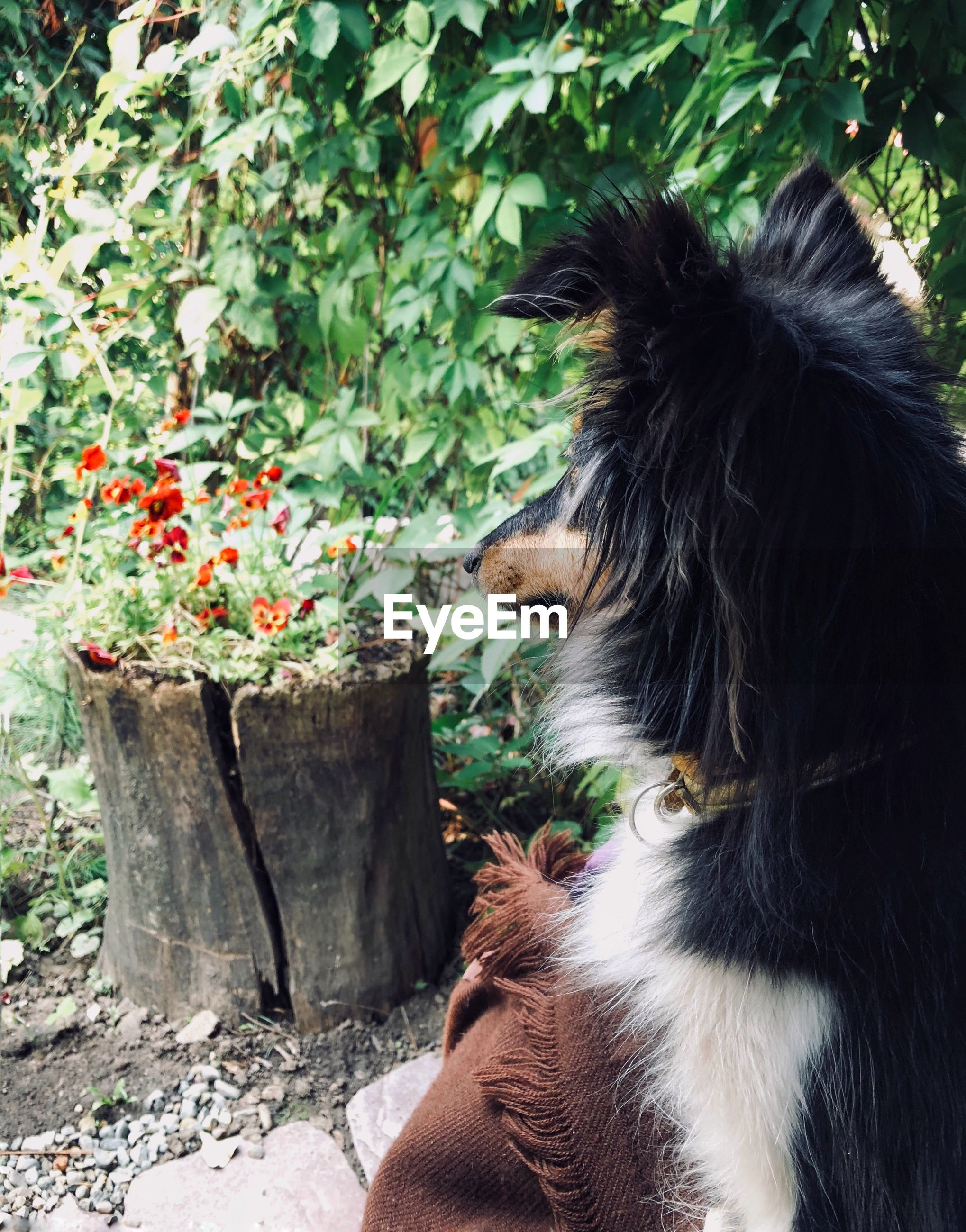 REAR VIEW OF PERSON WITH DOG AGAINST PLANTS