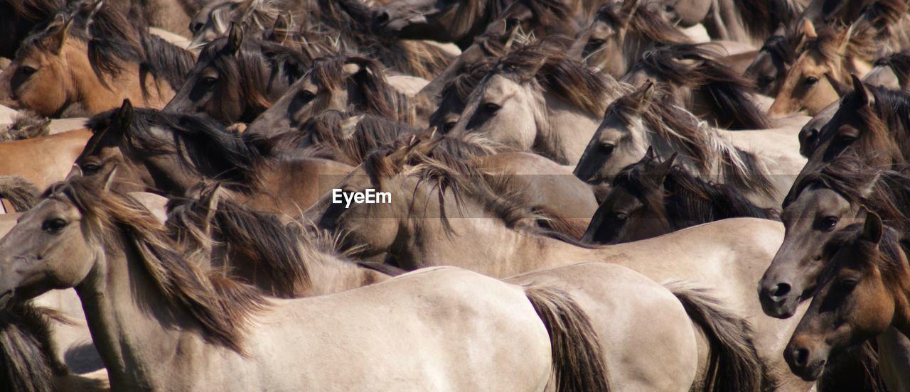 Full Frame Shot Of Horse Herd