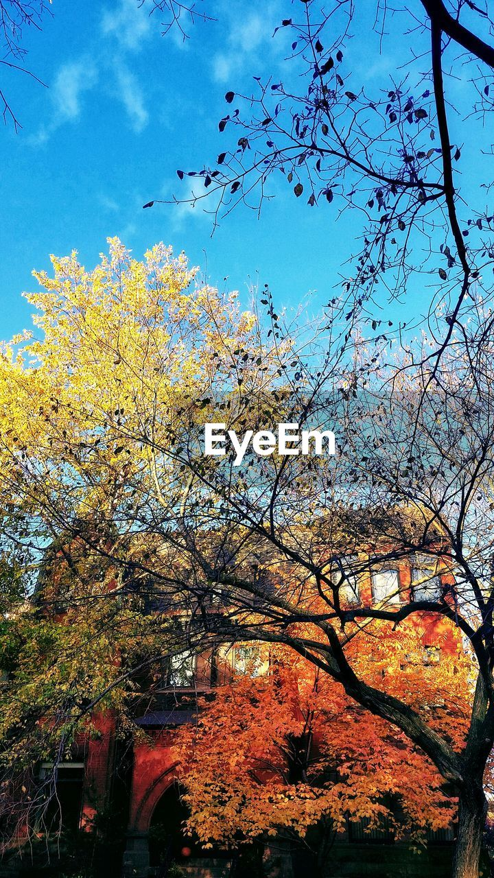 tree, branch, beauty in nature, sky, nature, growth, no people, day, outdoors, low angle view, autumn, built structure, architecture, building exterior, freshness