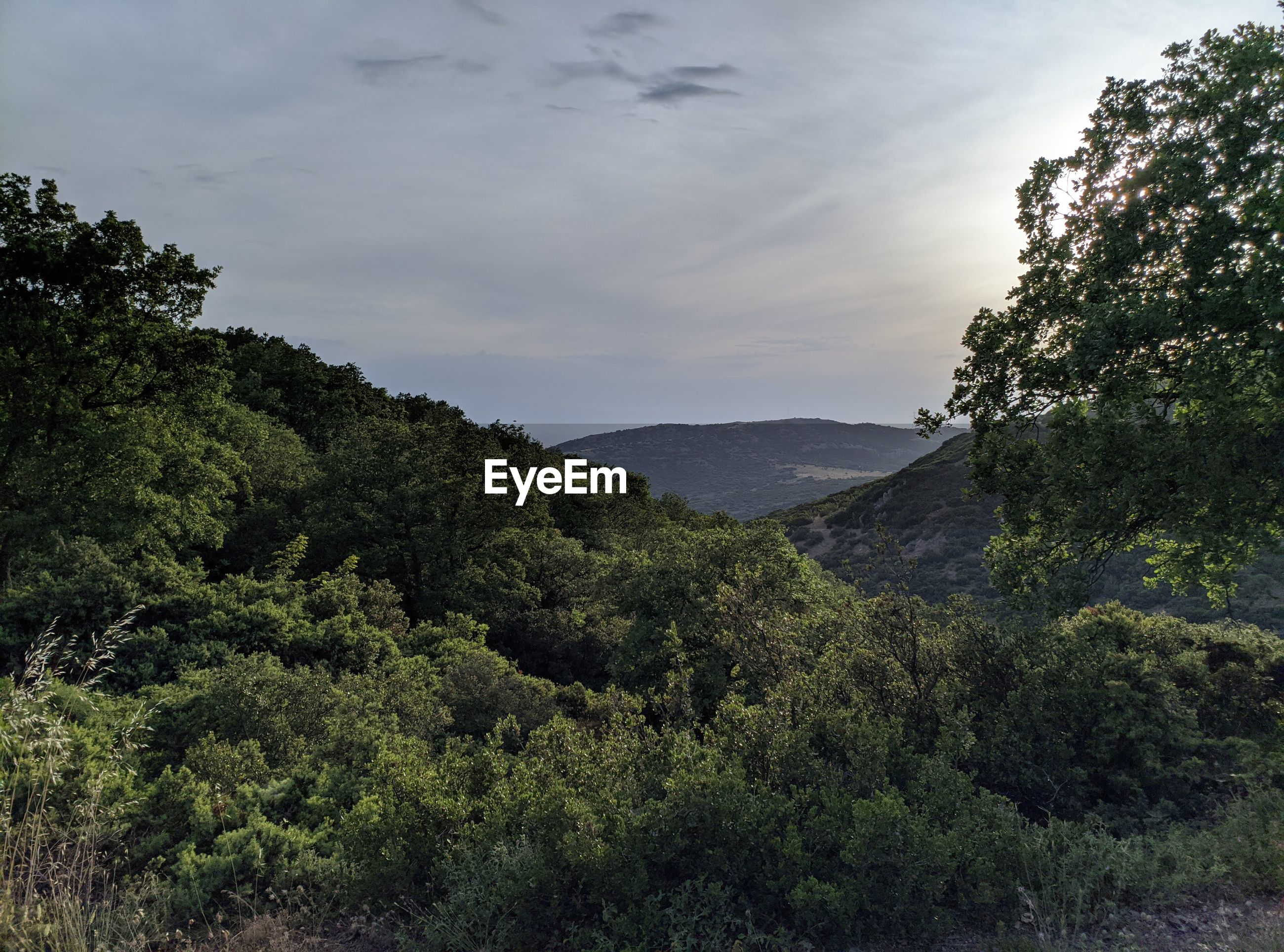SCENIC VIEW OF TREES GROWING ON MOUNTAIN AGAINST SKY