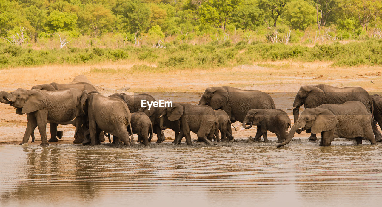 Elephant Drinking Water In Park