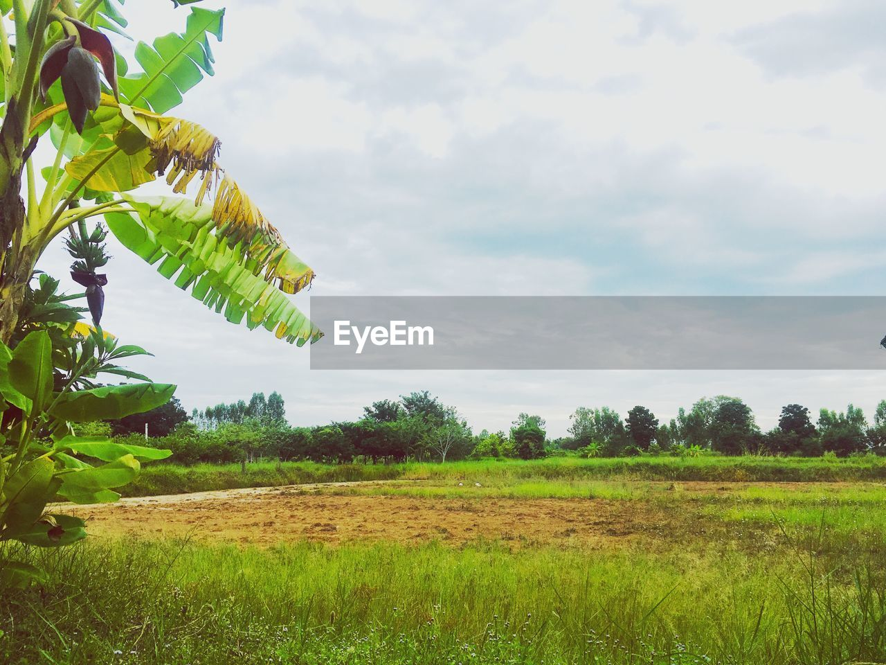 plant, sky, field, land, green color, environment, nature, landscape, tree, day, cloud - sky, growth, beauty in nature, tranquility, no people, grass, rural scene, outdoors, agriculture, scenics - nature