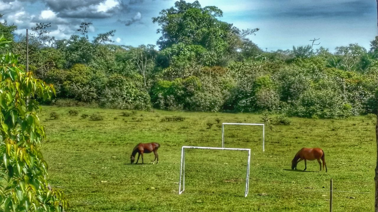 tree, field, animal themes, horse, mammal, grass, nature, domestic animals, day, green color, no people, landscape, cloud - sky, sky, grazing, livestock, outdoors, beauty in nature