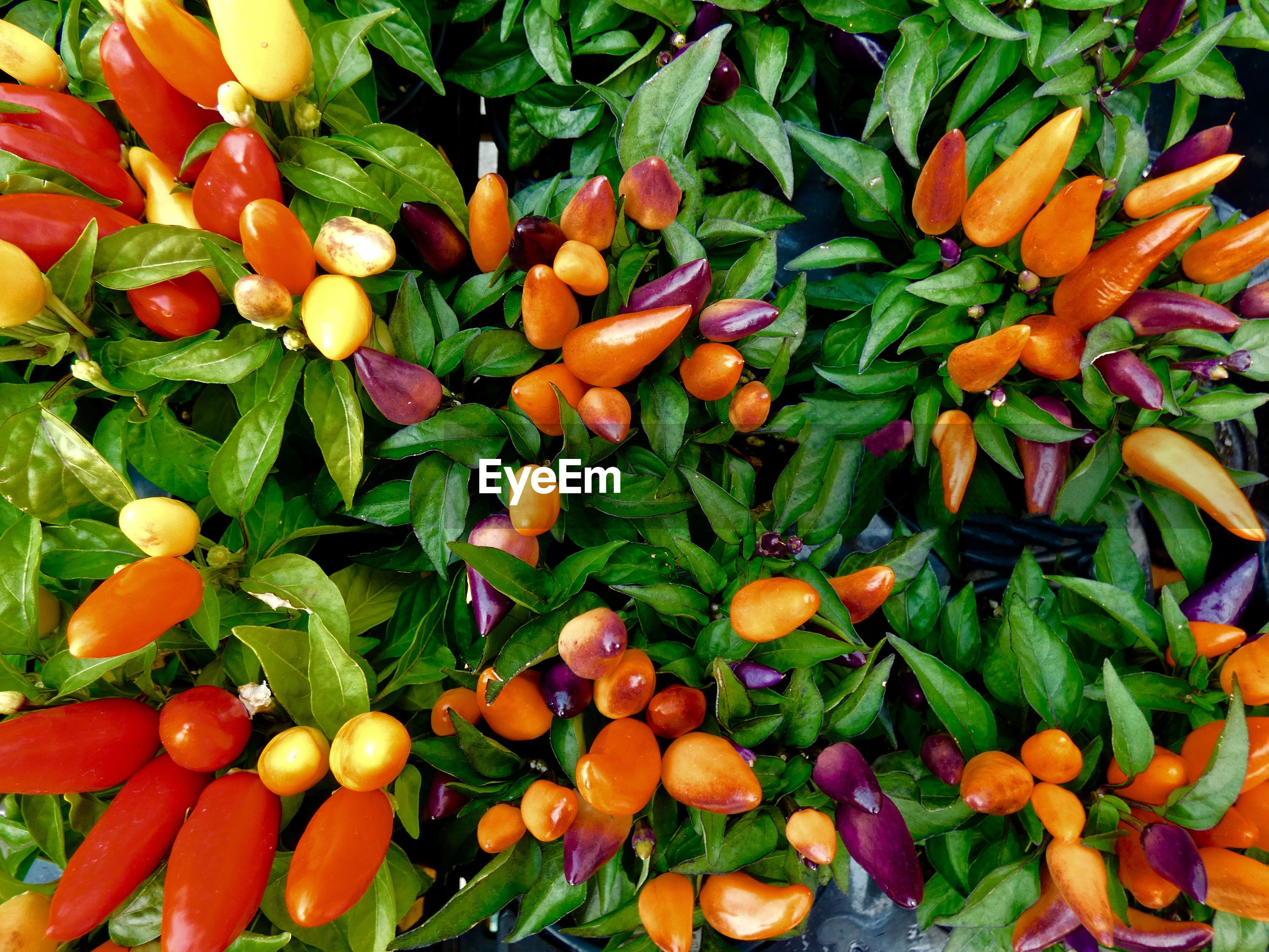 FULL FRAME SHOT OF FRUITS AND VEGETABLES