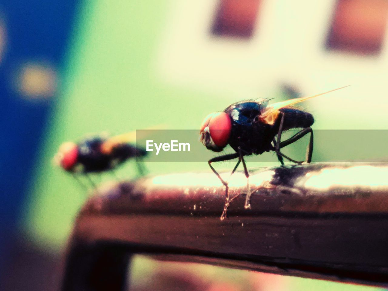 invertebrate, insect, animals in the wild, animal wildlife, animal themes, animal, close-up, one animal, selective focus, no people, fly, day, focus on foreground, animal wing, nature, housefly, zoology, ant, beetle, outdoors