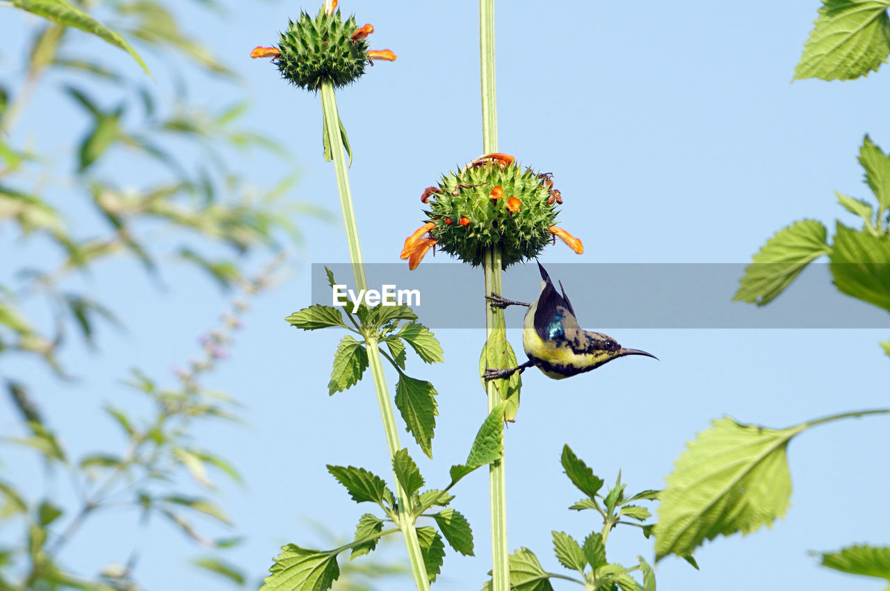 animals in the wild, animal themes, animal wildlife, animal, plant, one animal, bird, vertebrate, growth, nature, flowering plant, beauty in nature, flower, day, sky, no people, green color, flying, low angle view, clear sky, flower head, pollination