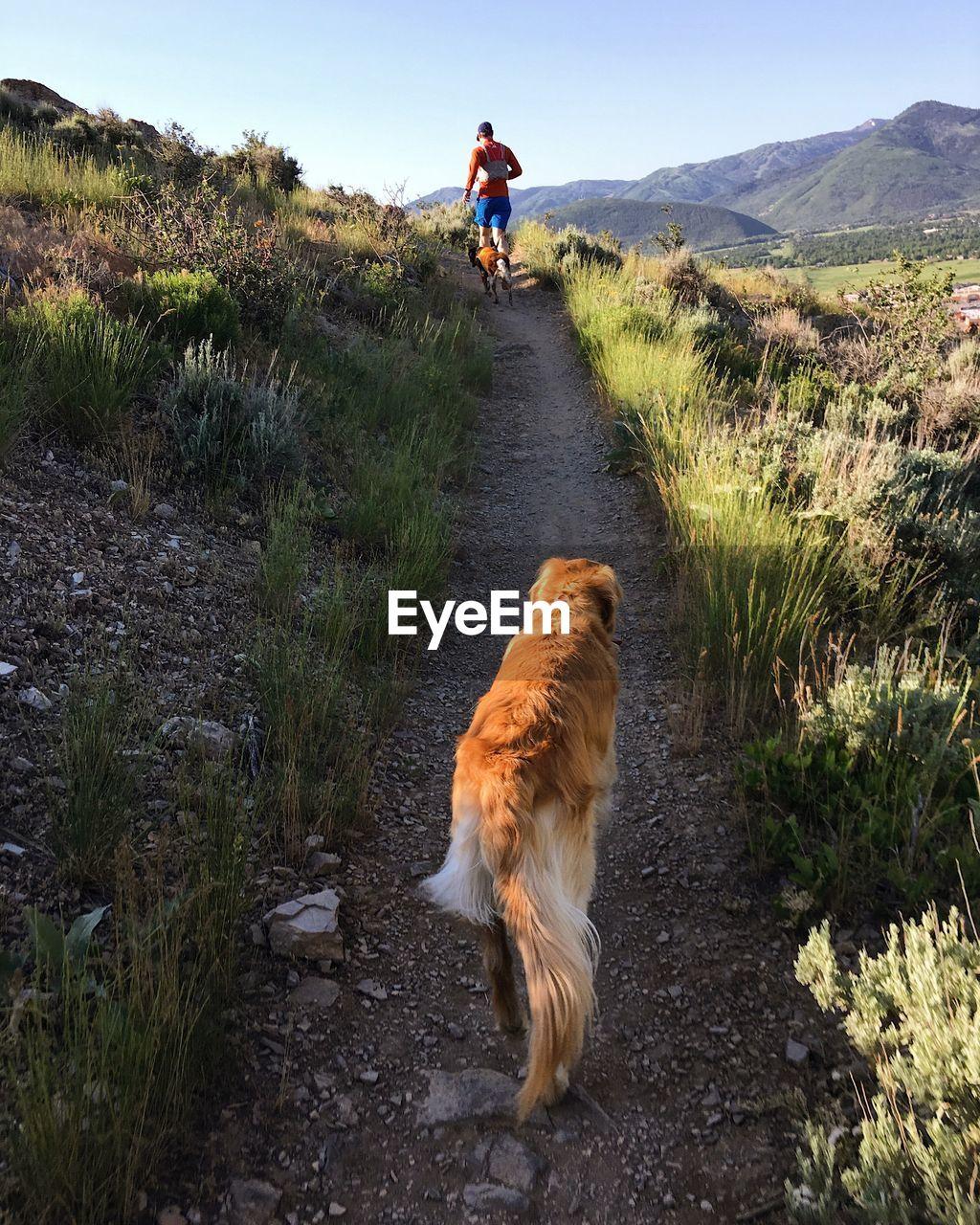 Rear View Of Dog Walking On Land
