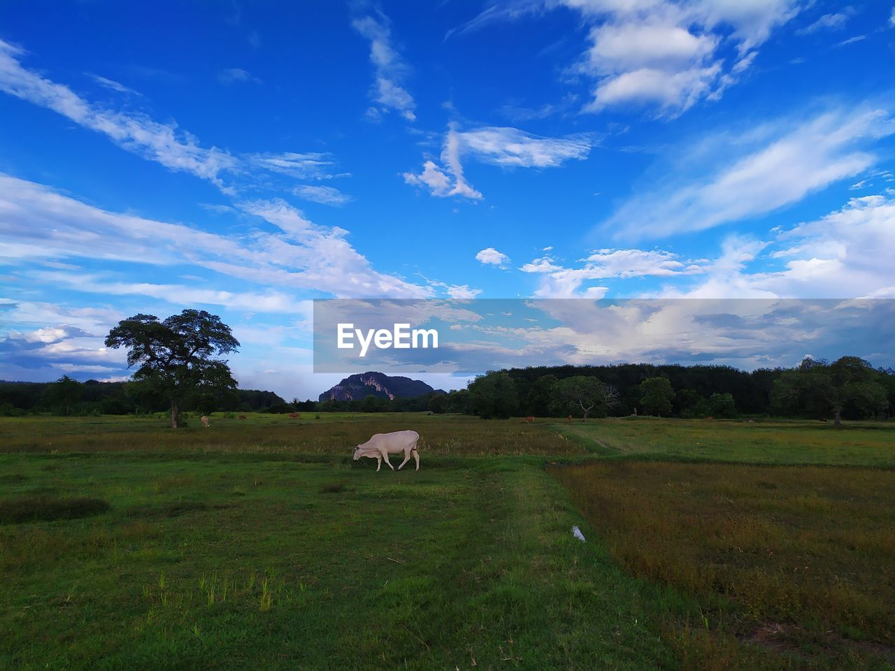 mammal, domestic, animal themes, animal, cloud - sky, sky, domestic animals, field, pets, land, livestock, landscape, grass, vertebrate, environment, grazing, plant, agriculture, no people, nature, outdoors, herbivorous