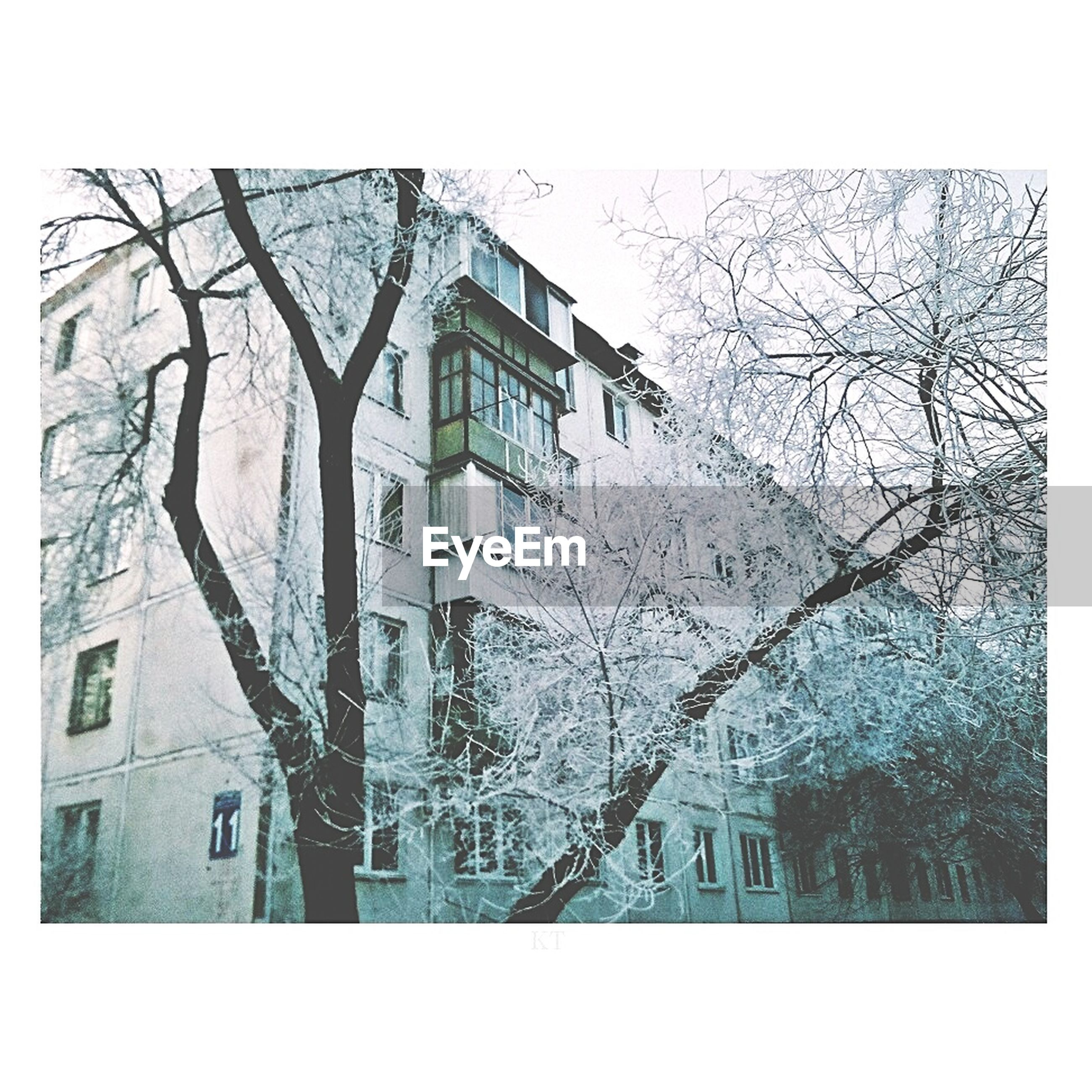building exterior, architecture, built structure, bare tree, transfer print, tree, branch, auto post production filter, window, house, residential structure, residential building, building, weather, winter, season, sky, day, outdoors, cold temperature