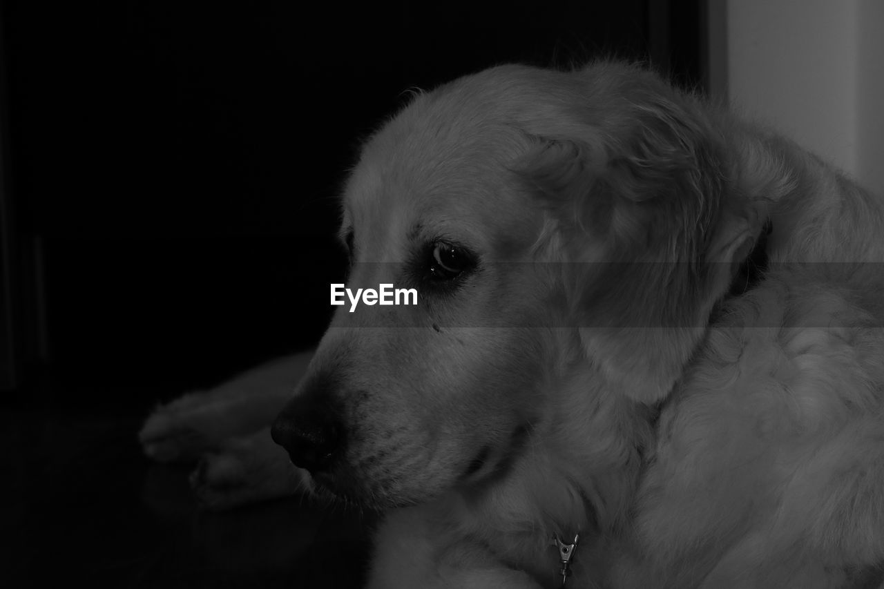 pets, dog, one animal, domestic animals, animal themes, mammal, indoors, close-up, no people, day