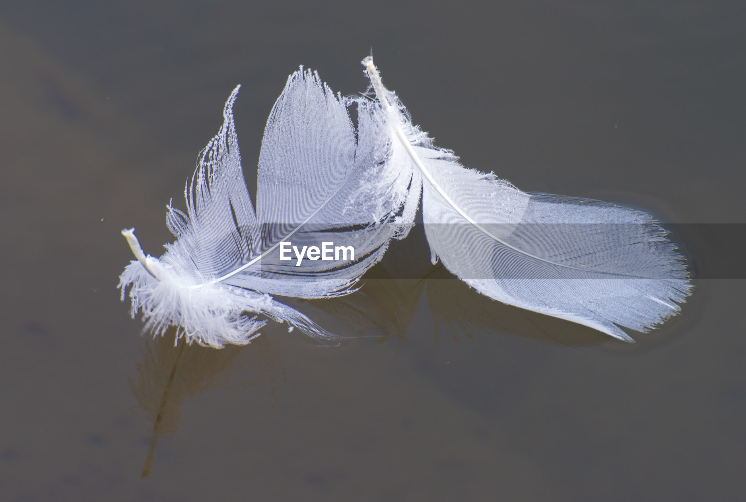 HIGH ANGLE VIEW OF FEATHER FLOATING ON LAKE