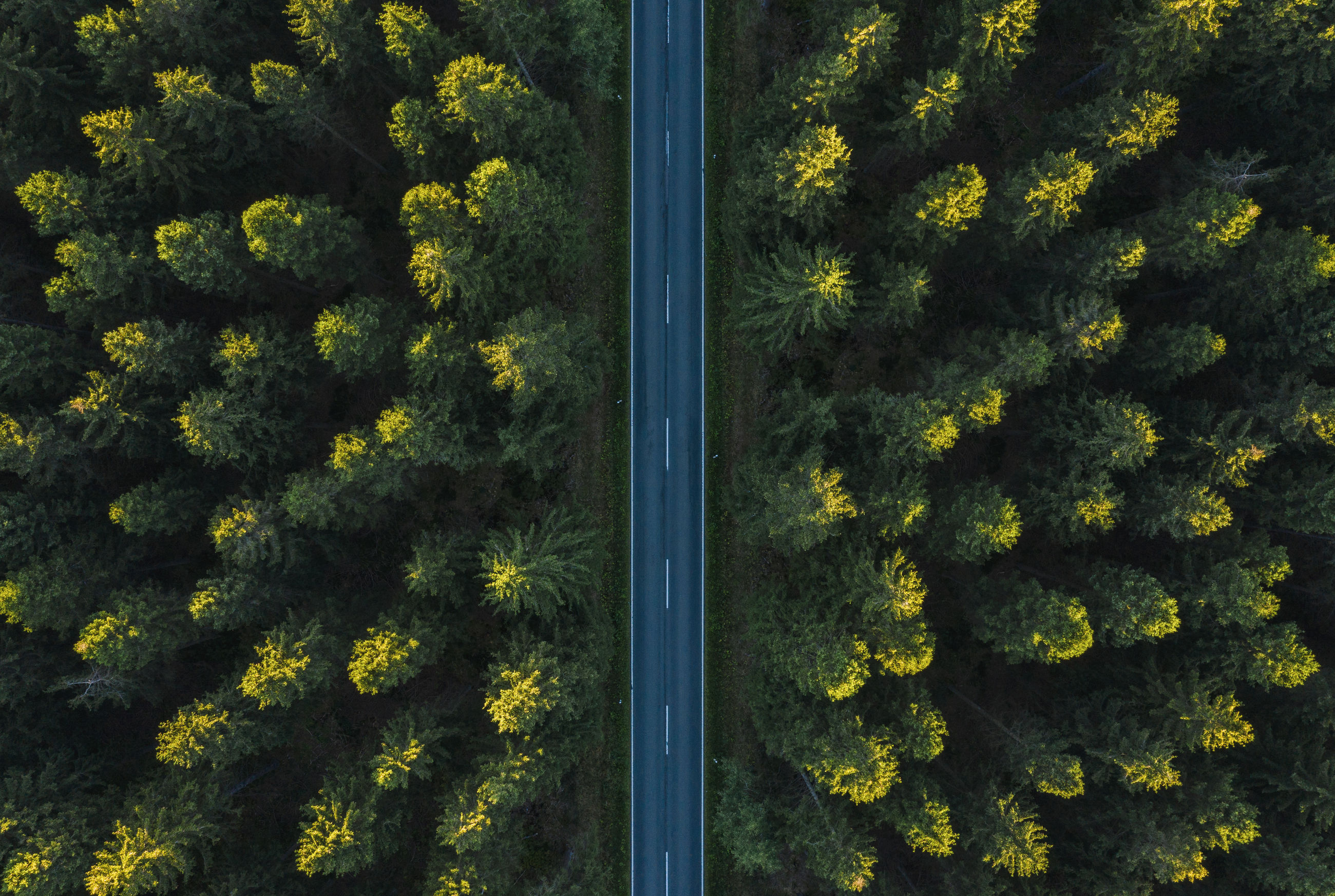 Full frame shot of road amidst trees in forest