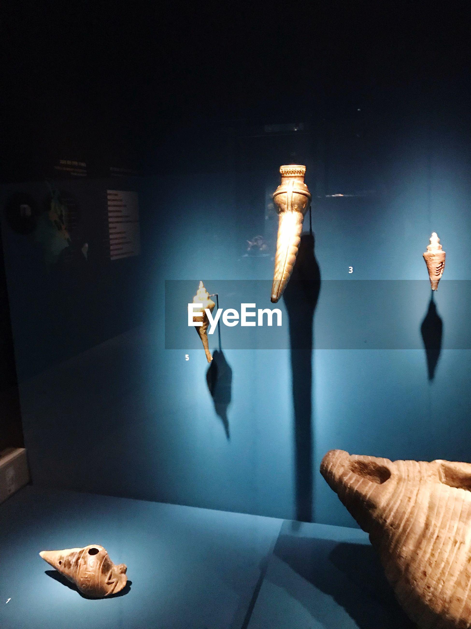 VIEW OF ILLUMINATED FISH IN AQUARIUM