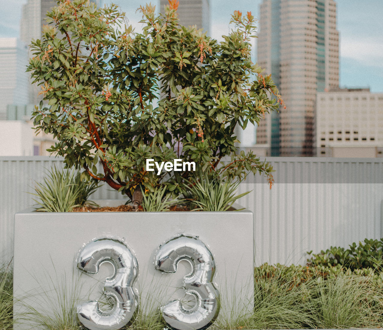 Close-up of number balloons by plant against buildings