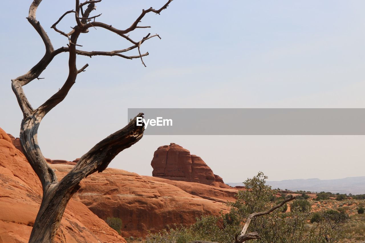 Bare Tree At Arches National Park Against Sky