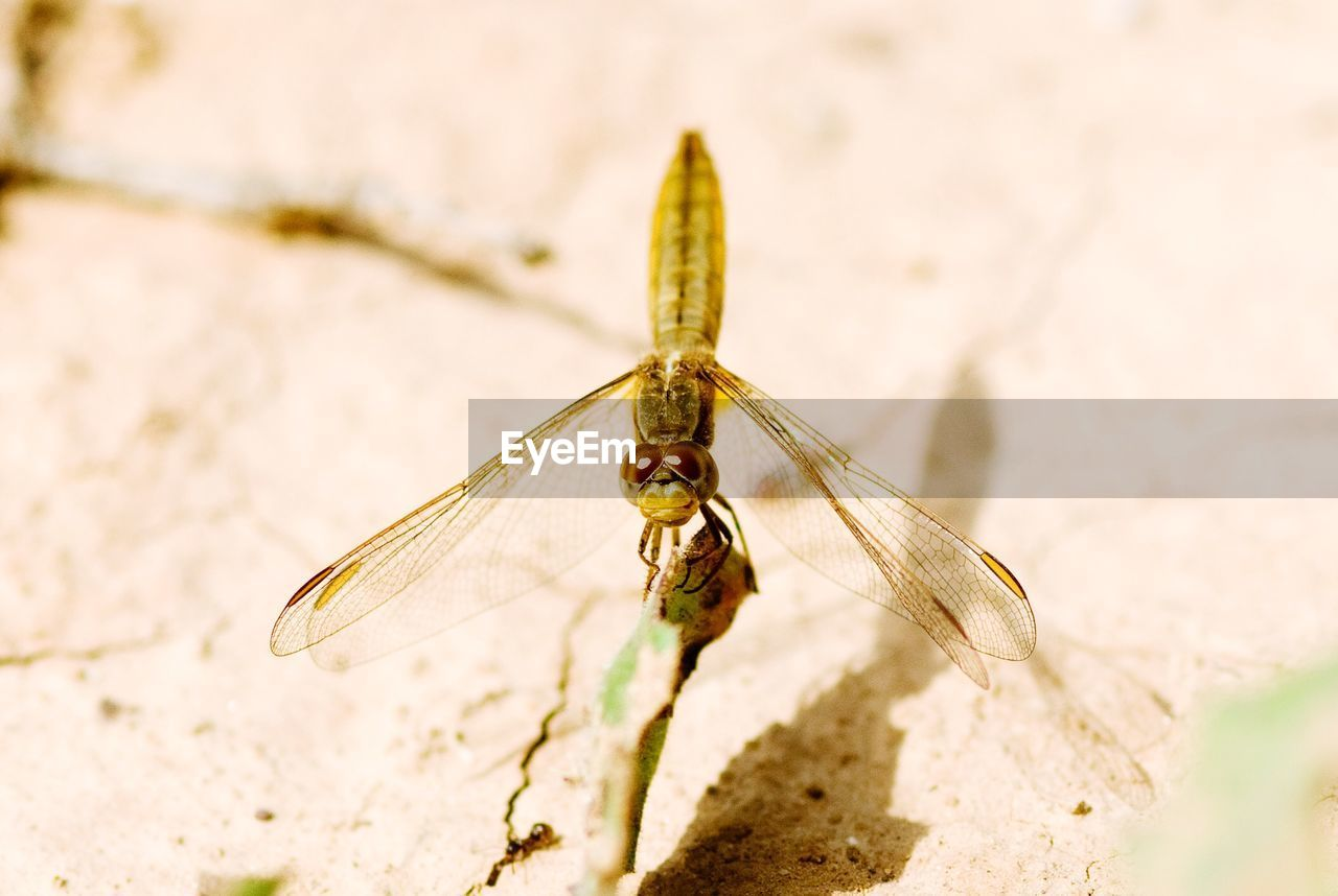 insect, animals in the wild, invertebrate, one animal, animal wildlife, animal, animal themes, close-up, animal wing, nature, no people, day, selective focus, focus on foreground, outdoors, sunlight, high angle view, beauty in nature, animal body part, dragonfly, animal eye