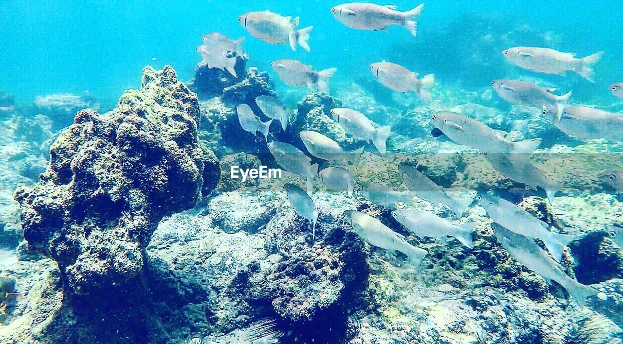 underwater, undersea, sea, water, nature, sea life, large group of animals, animal themes, coral, animals in the wild, rock - object, scuba diving, swimming, blue, no people, day, beauty in nature, outdoors