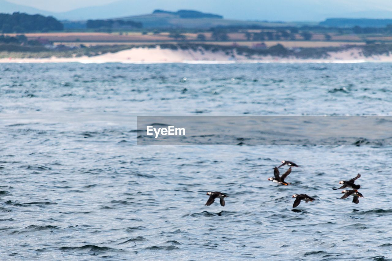 water, sea, waterfront, group of animals, beauty in nature, animals in the wild, animal wildlife, animal, motion, animal themes, scenics - nature, day, nature, vertebrate, outdoors, no people, land, bird, sport