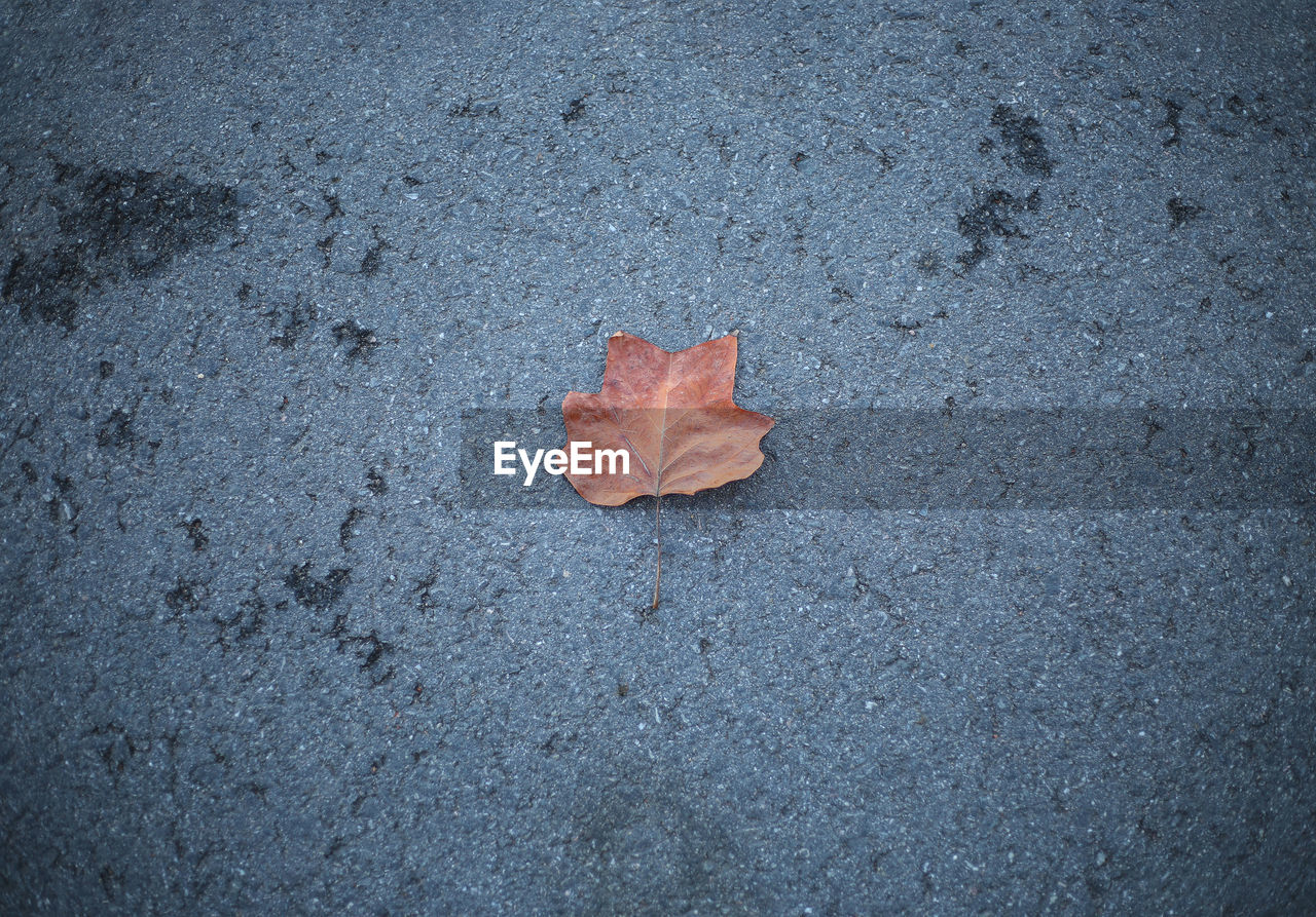 HIGH ANGLE VIEW OF MAPLE LEAVES ON STREET