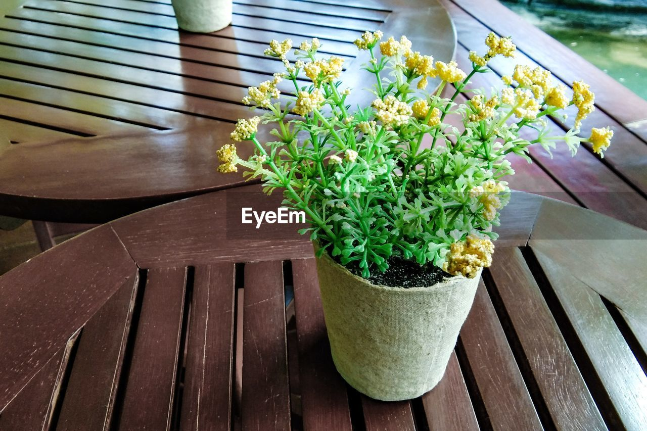plant, flower, potted plant, wood - material, growth, flowering plant, nature, freshness, table, green color, no people, day, high angle view, beauty in nature, close-up, outdoors, vulnerability, fragility, plant part, leaf, flower pot, flower head, gardening