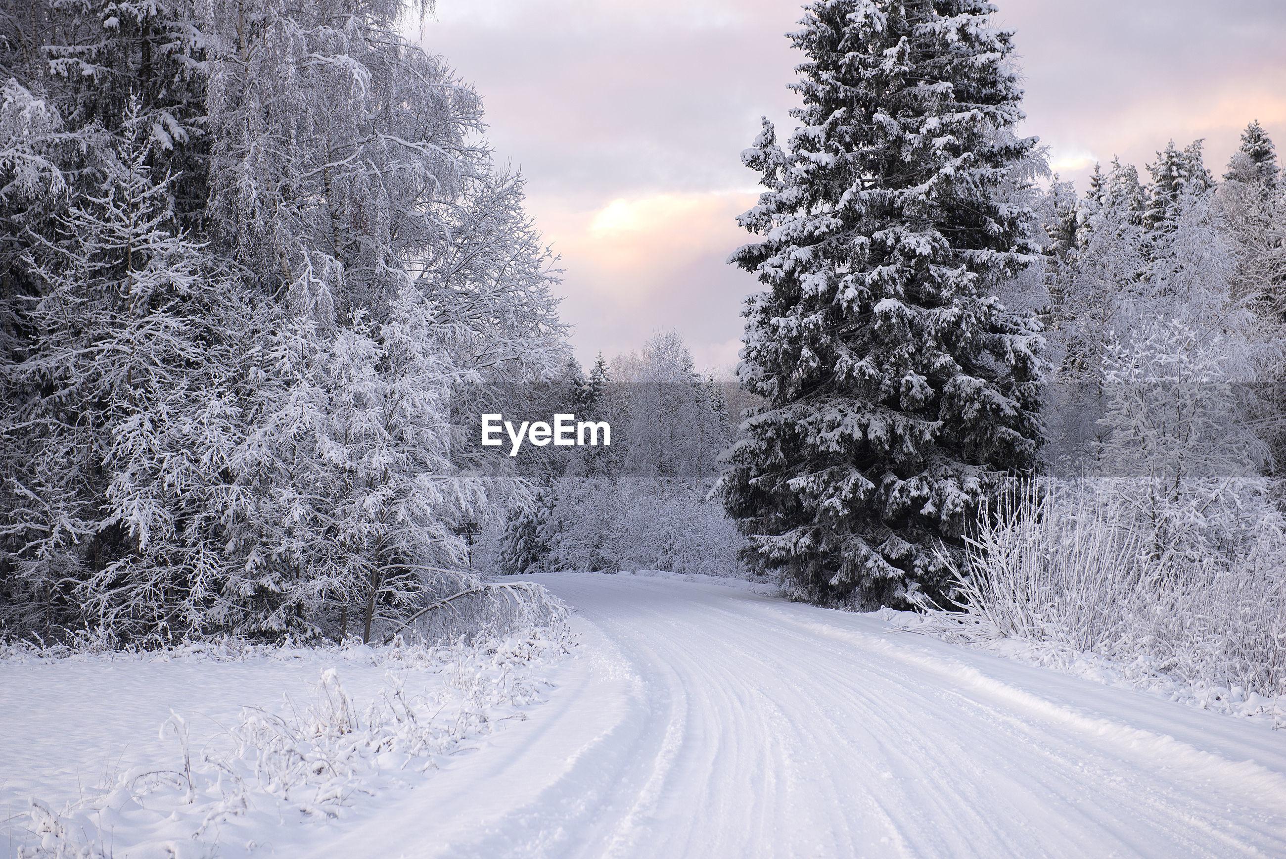 Snowy winter road landscape