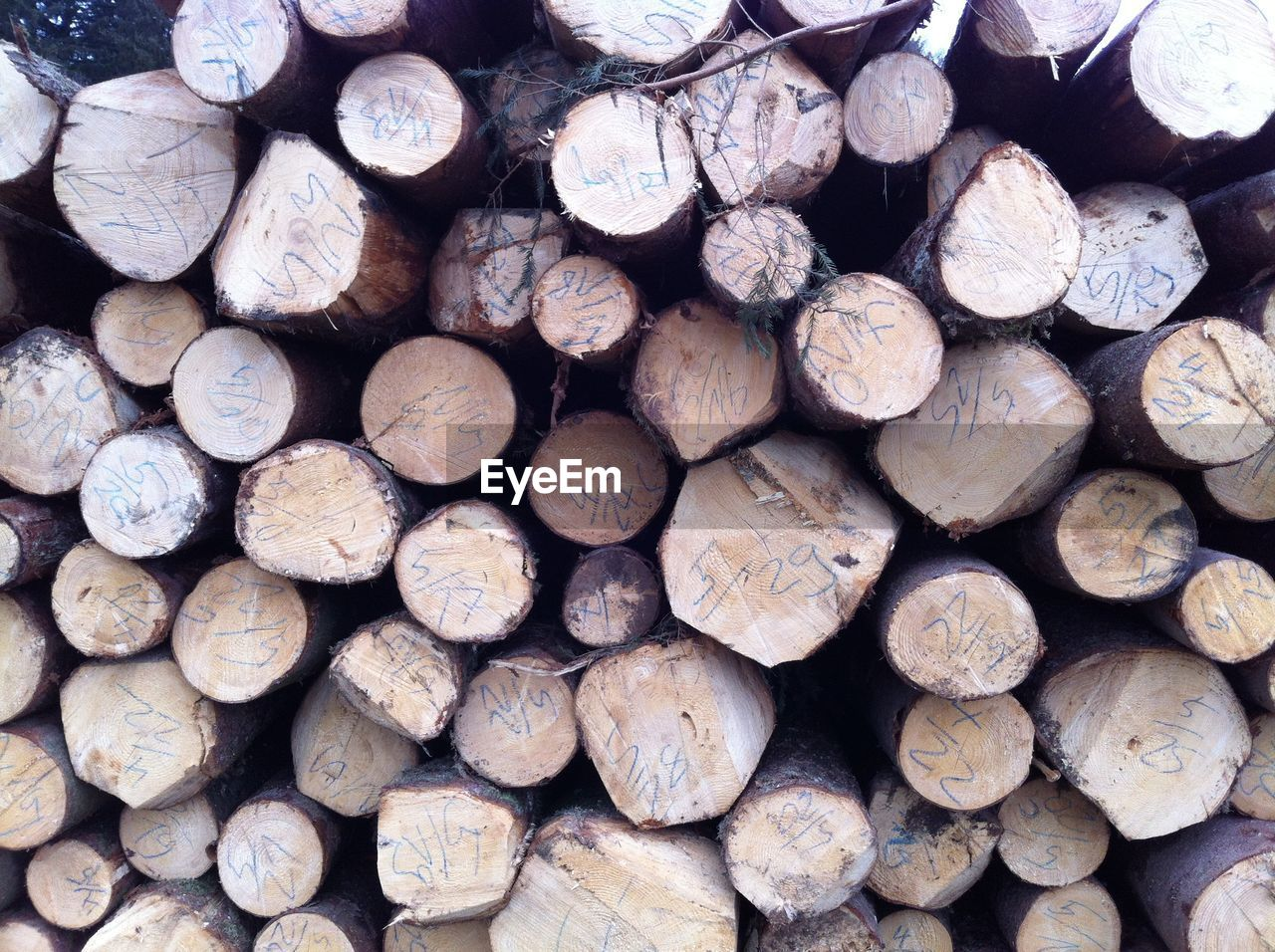 large group of objects, timber, lumber industry, log, stack, firewood, wood, backgrounds, wood - material, abundance, full frame, forest, tree, deforestation, woodpile, heap, environmental issues, no people, textured, fuel and power generation, outdoors