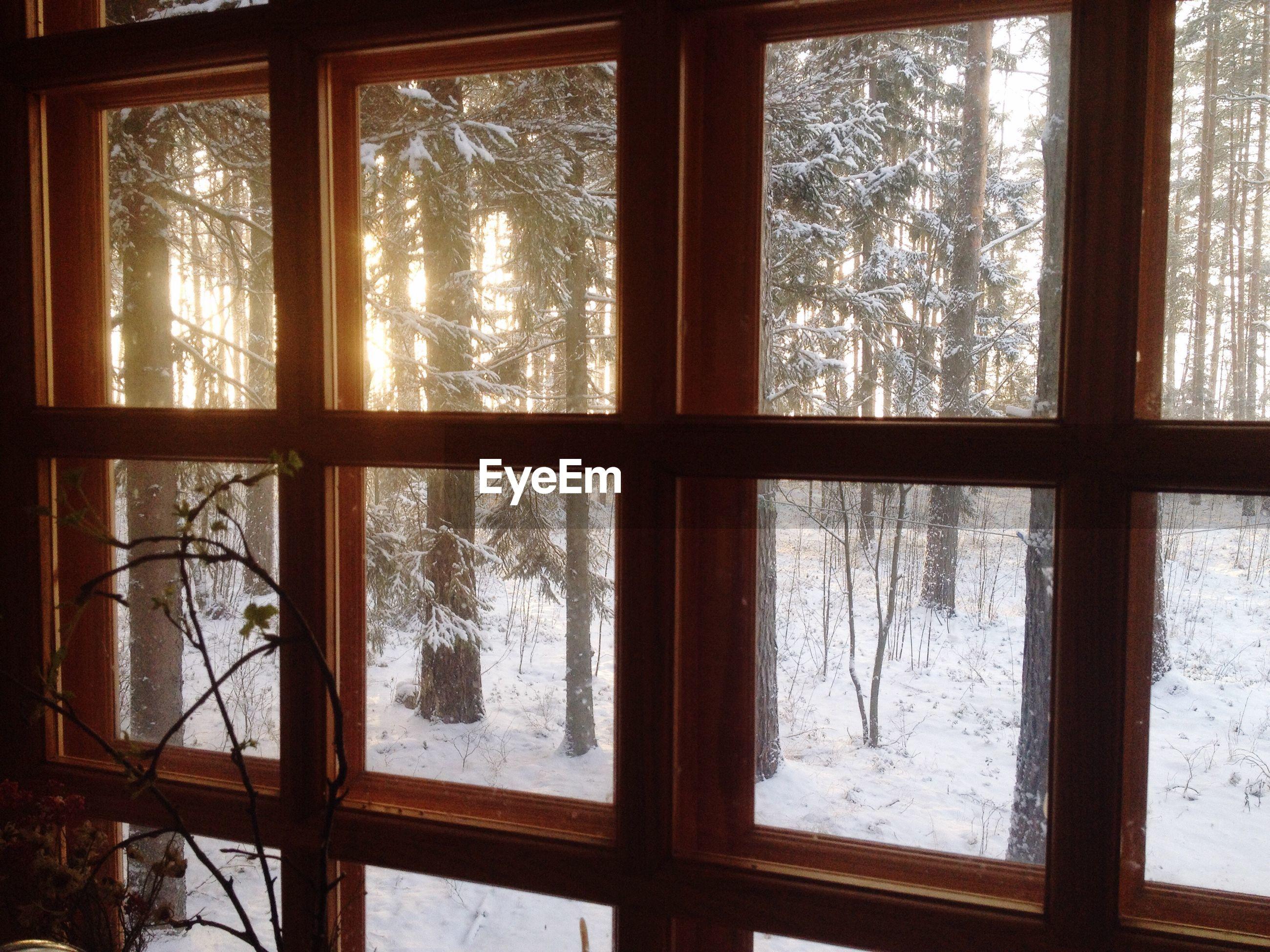 Frozen trees seen through window