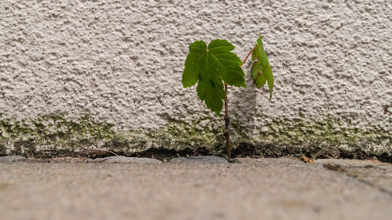 leaf, plant part, plant, nature, growth, green color, no people, selective focus, wall - building feature, day, close-up, outdoors, footpath, textured, architecture, built structure, solid, beginnings, vulnerability, beauty in nature, small, surface level, concrete