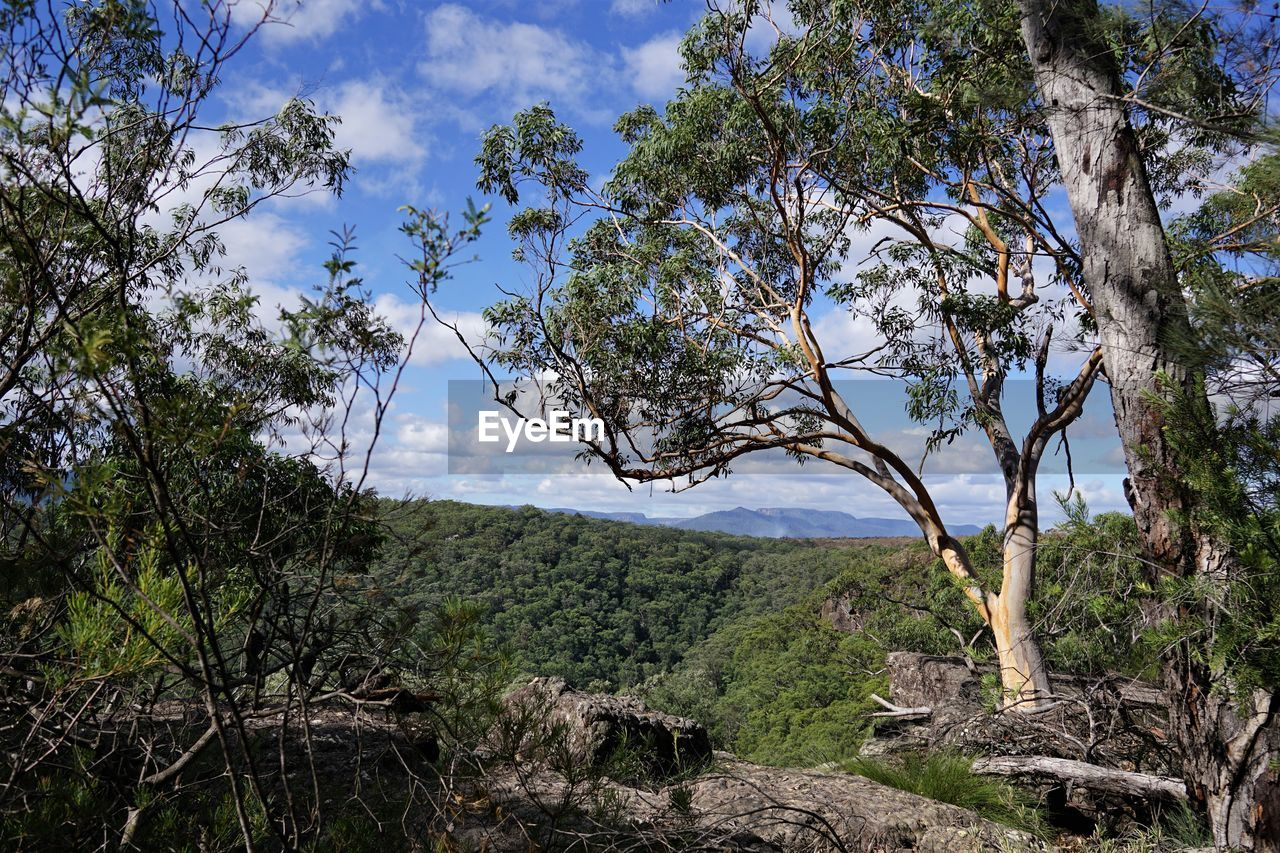 tree, plant, sky, environment, growth, landscape, land, beauty in nature, nature, no people, tranquility, forest, cloud - sky, outdoors, scenics - nature, branch, mountain, day, freedom, travel