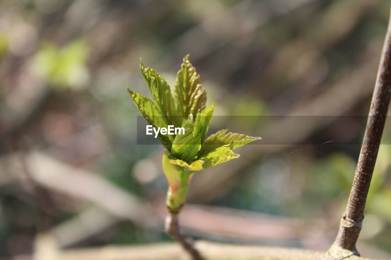 growth, green color, plant, nature, focus on foreground, close-up, outdoors, day, beauty in nature, no people, new life, sunlight, fragility, freshness