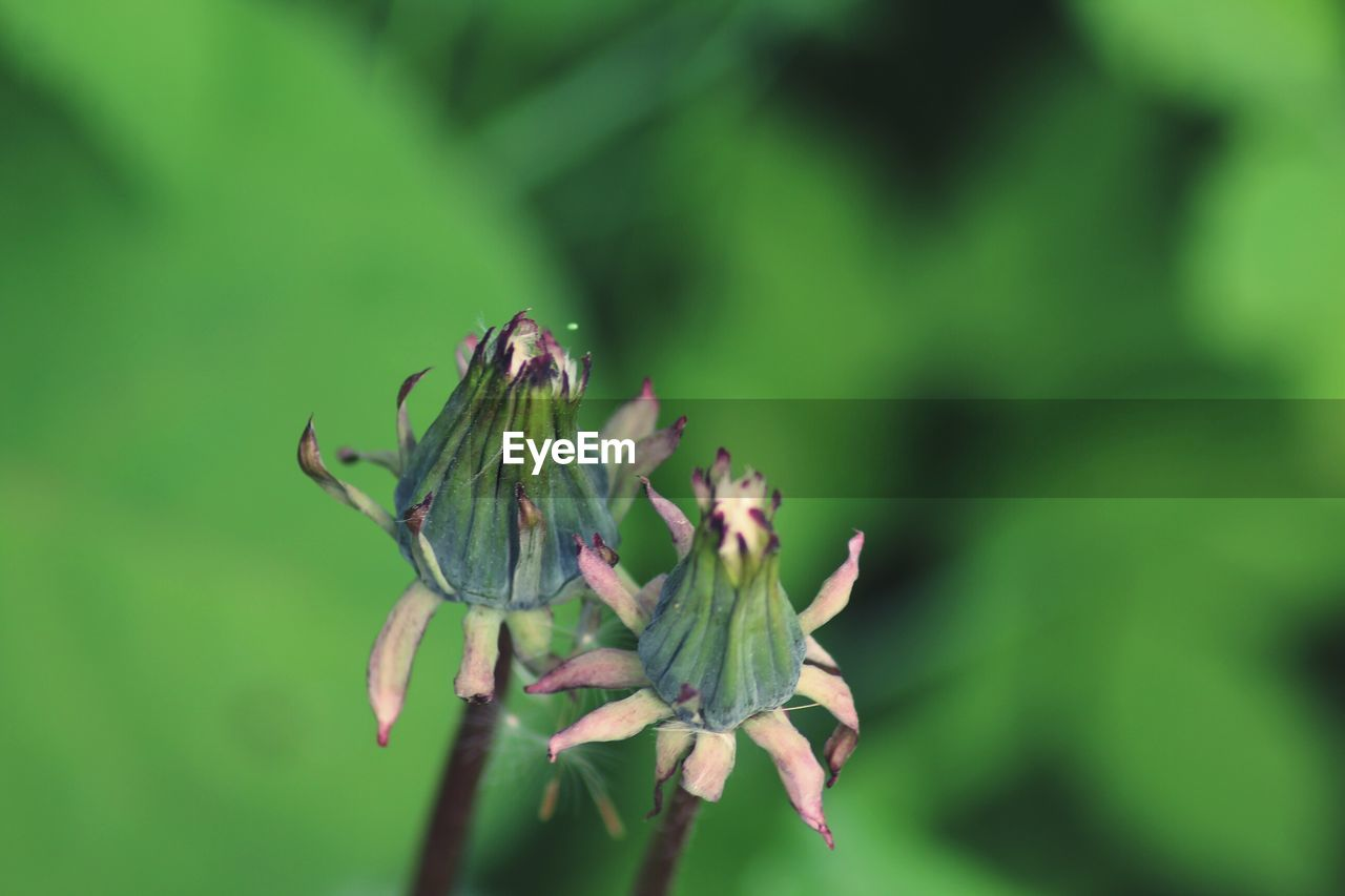 green color, nature, plant, growth, insect, no people, flower, focus on foreground, day, outdoors, beauty in nature, close-up, animal themes, animals in the wild, fragility, freshness, flower head