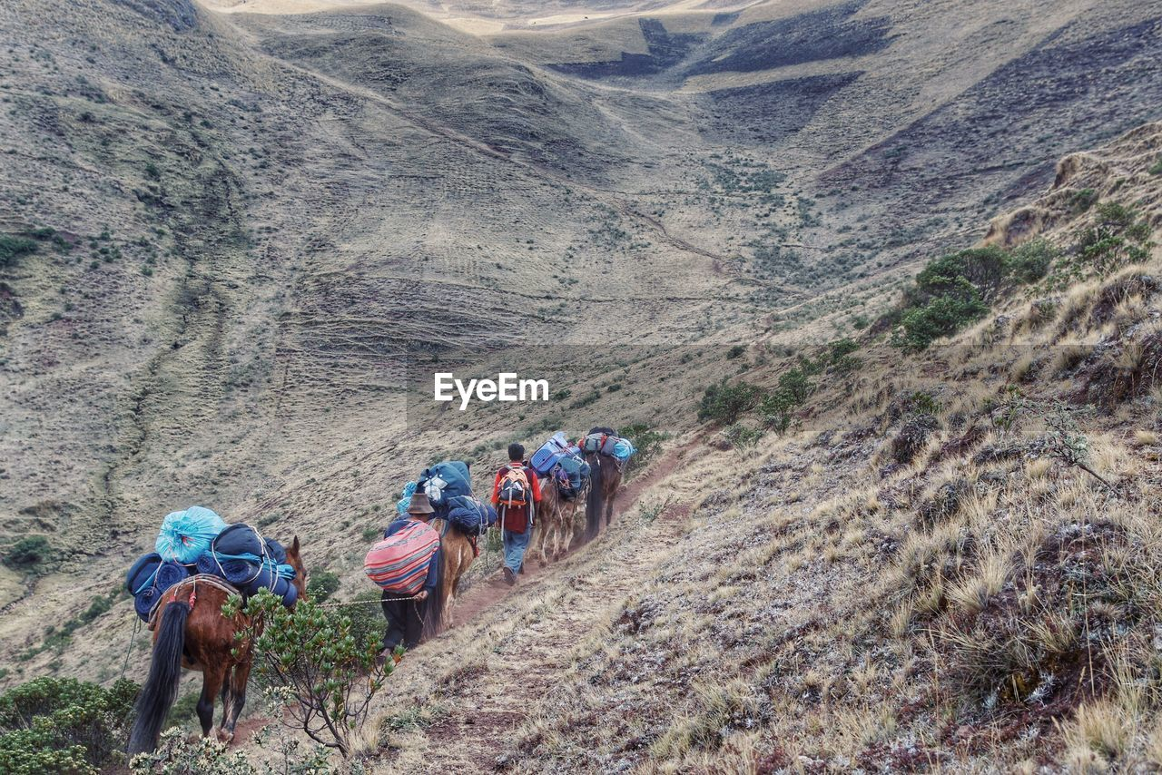 Donkeys Carrying Loads Walking With Man On Mountain