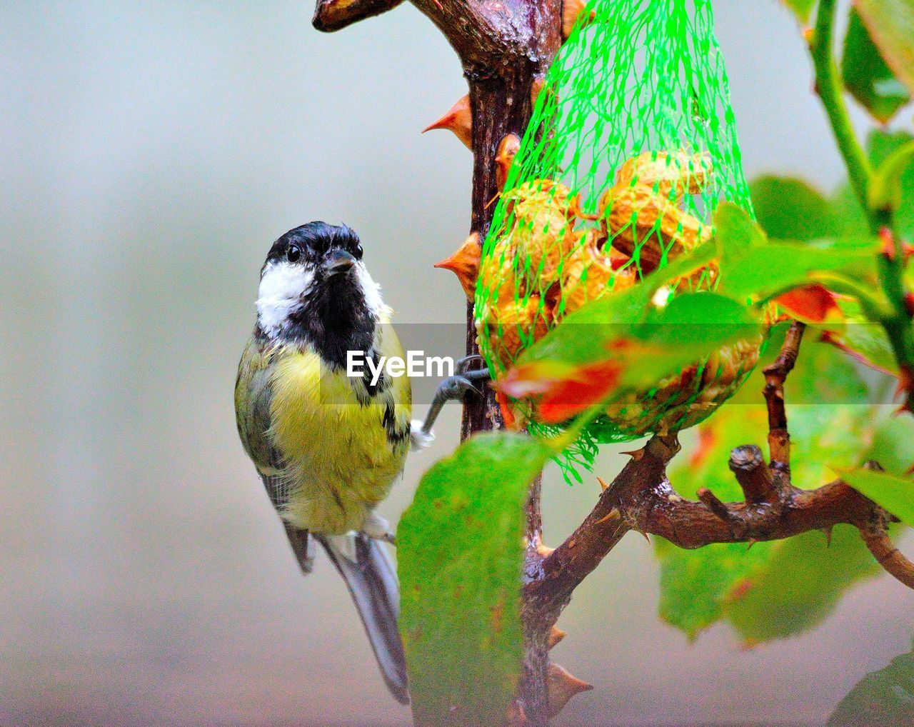 animal themes, animal, bird, animal wildlife, vertebrate, animals in the wild, perching, one animal, tree, plant, branch, nature, no people, day, focus on foreground, plant part, close-up, leaf, beauty in nature, outdoors, beak