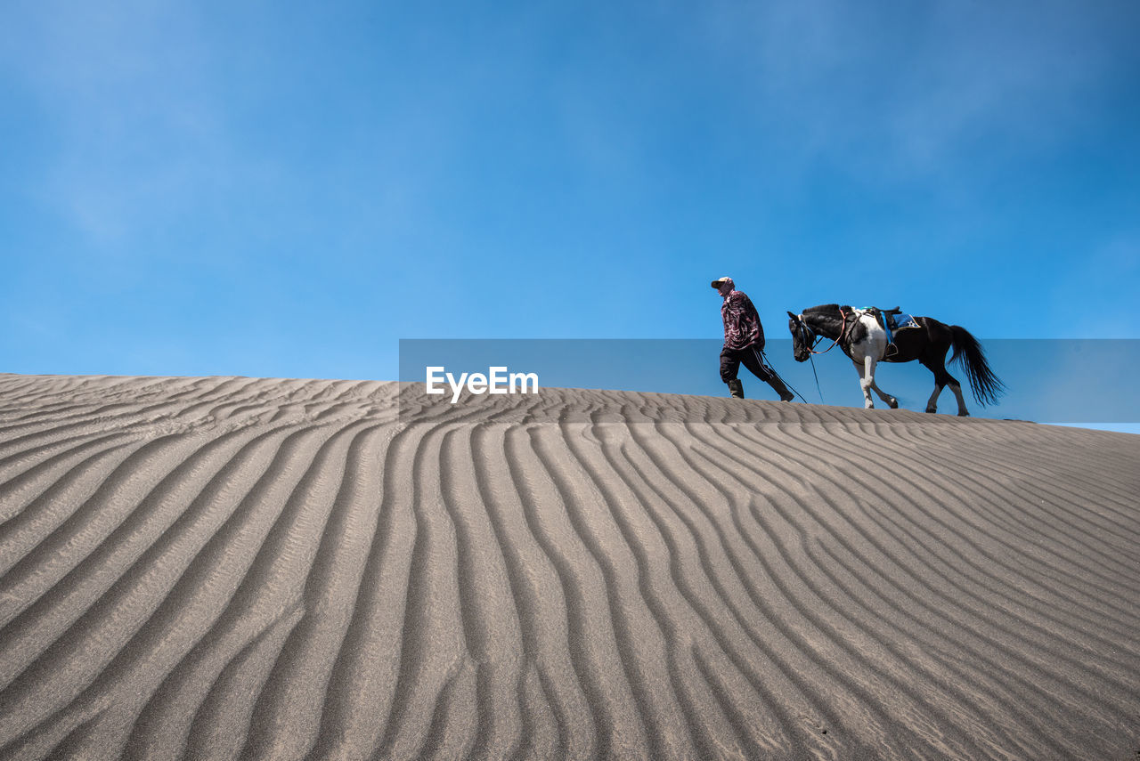 Low Angle View Of Man Walking With Horse On Desert Against Blue Sky
