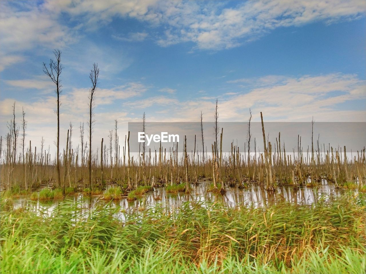plant, cloud - sky, sky, beauty in nature, water, tranquility, growth, nature, grass, no people, tranquil scene, scenics - nature, day, outdoors, lake, reflection, non-urban scene, landscape, land, swamp