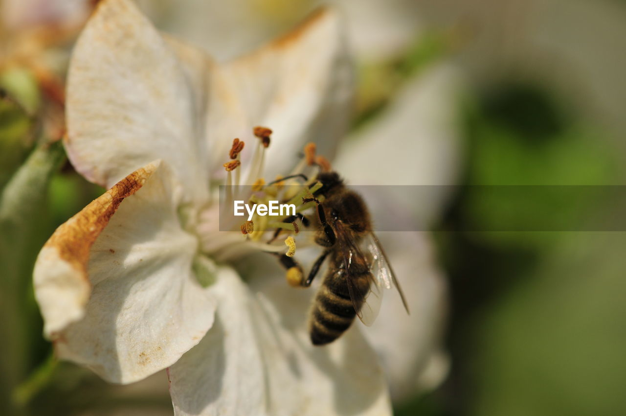 insect, invertebrate, flower, flowering plant, beauty in nature, animals in the wild, animal themes, vulnerability, fragility, bee, petal, animal, animal wildlife, flower head, close-up, growth, plant, one animal, freshness, pollen, pollination, no people, outdoors