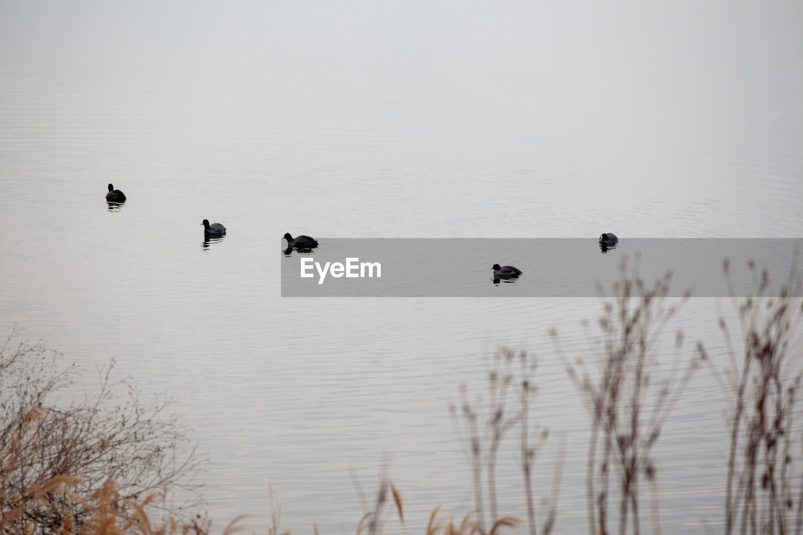 Flock of birds flying over lake