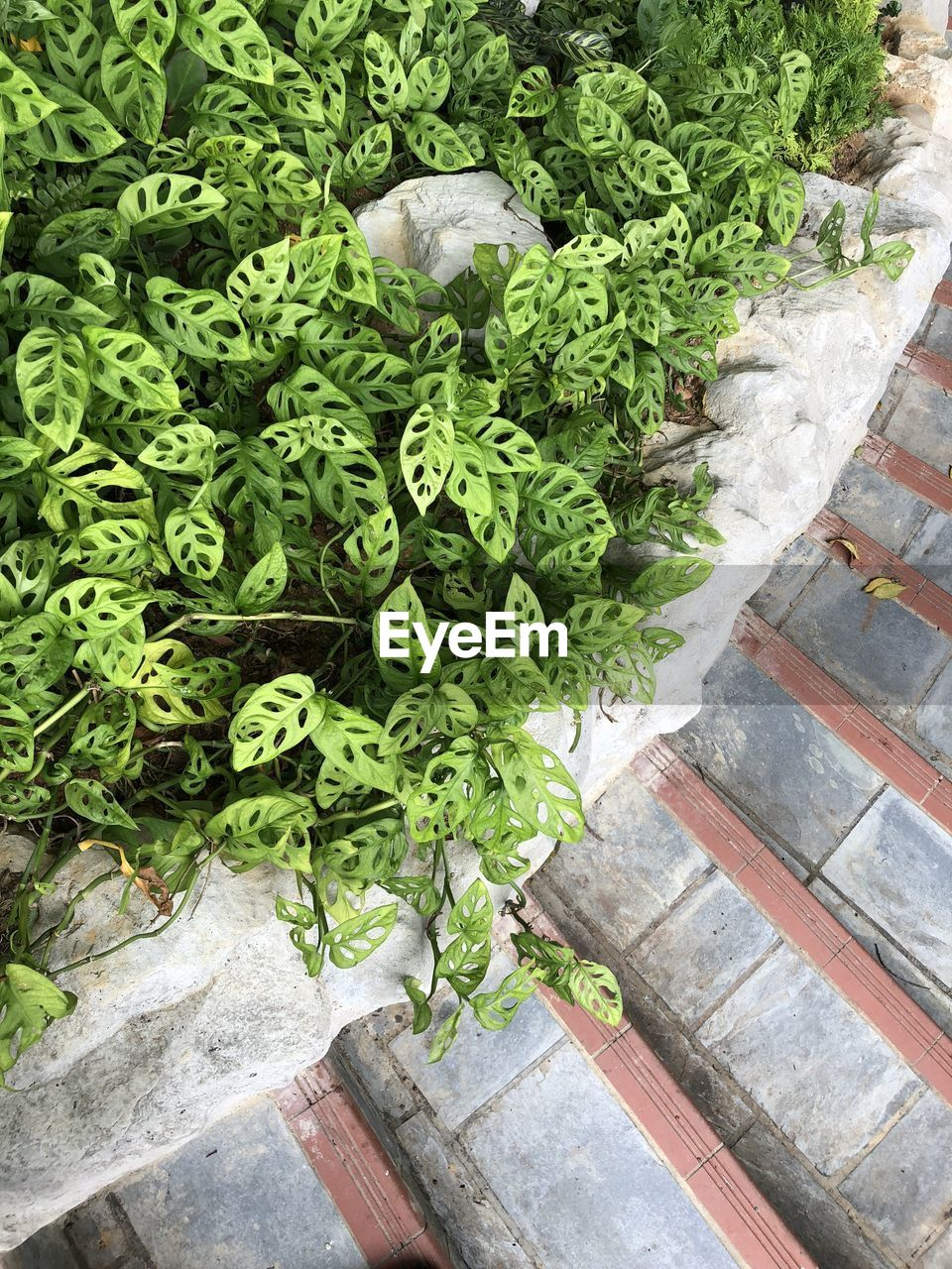 green color, high angle view, day, no people, freshness, growth, wellbeing, food and drink, healthy eating, vegetable, plant, food, for sale, outdoors, market, nature, raw food, plant part, retail, leaf, vegetarian food, coriander