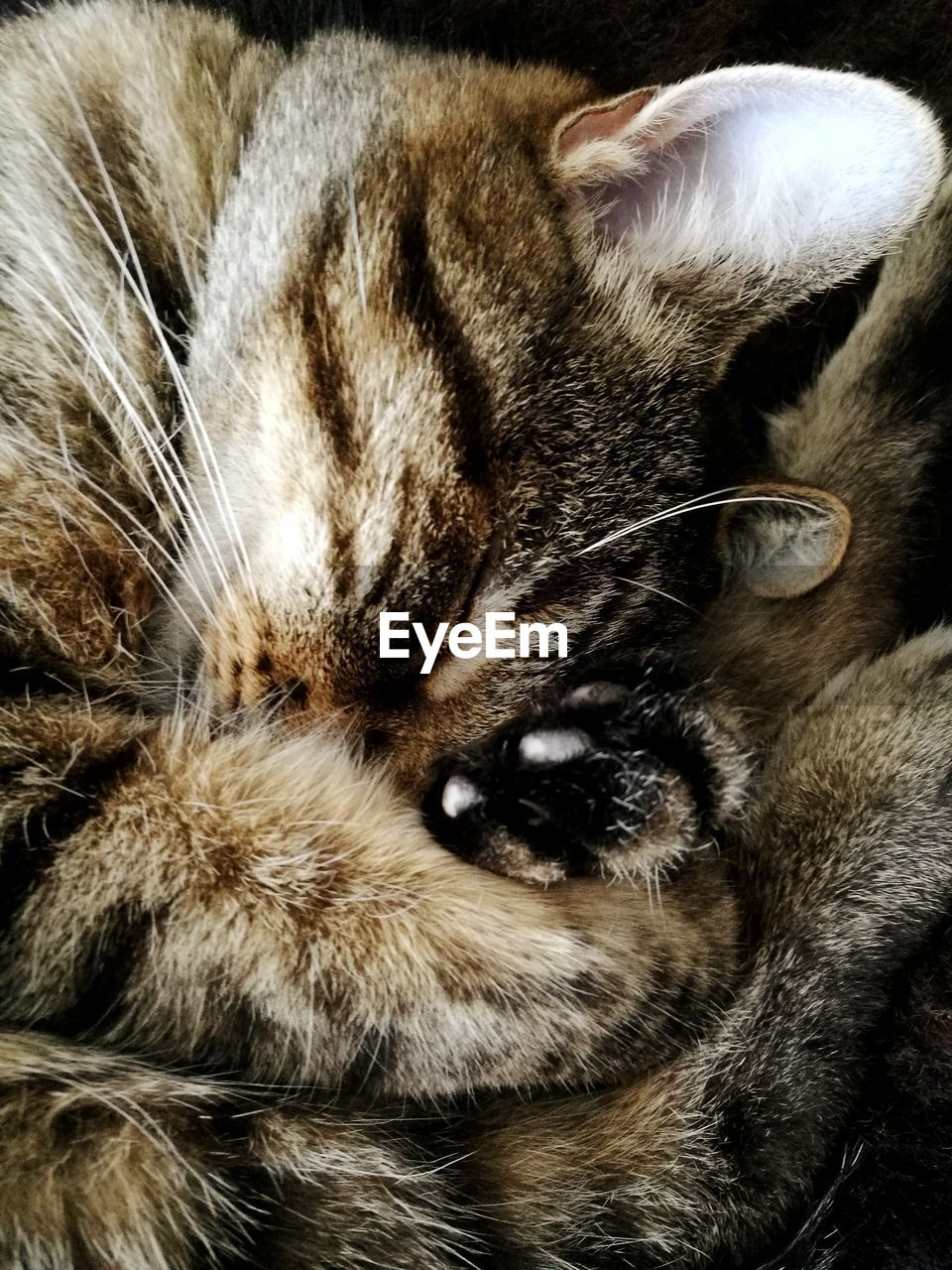 mammal, animal themes, animal, one animal, pets, domestic animals, cat, domestic cat, domestic, feline, whisker, animal body part, relaxation, close-up, no people, indoors, animal head, cute, vertebrate, portrait, tabby, snout, napping