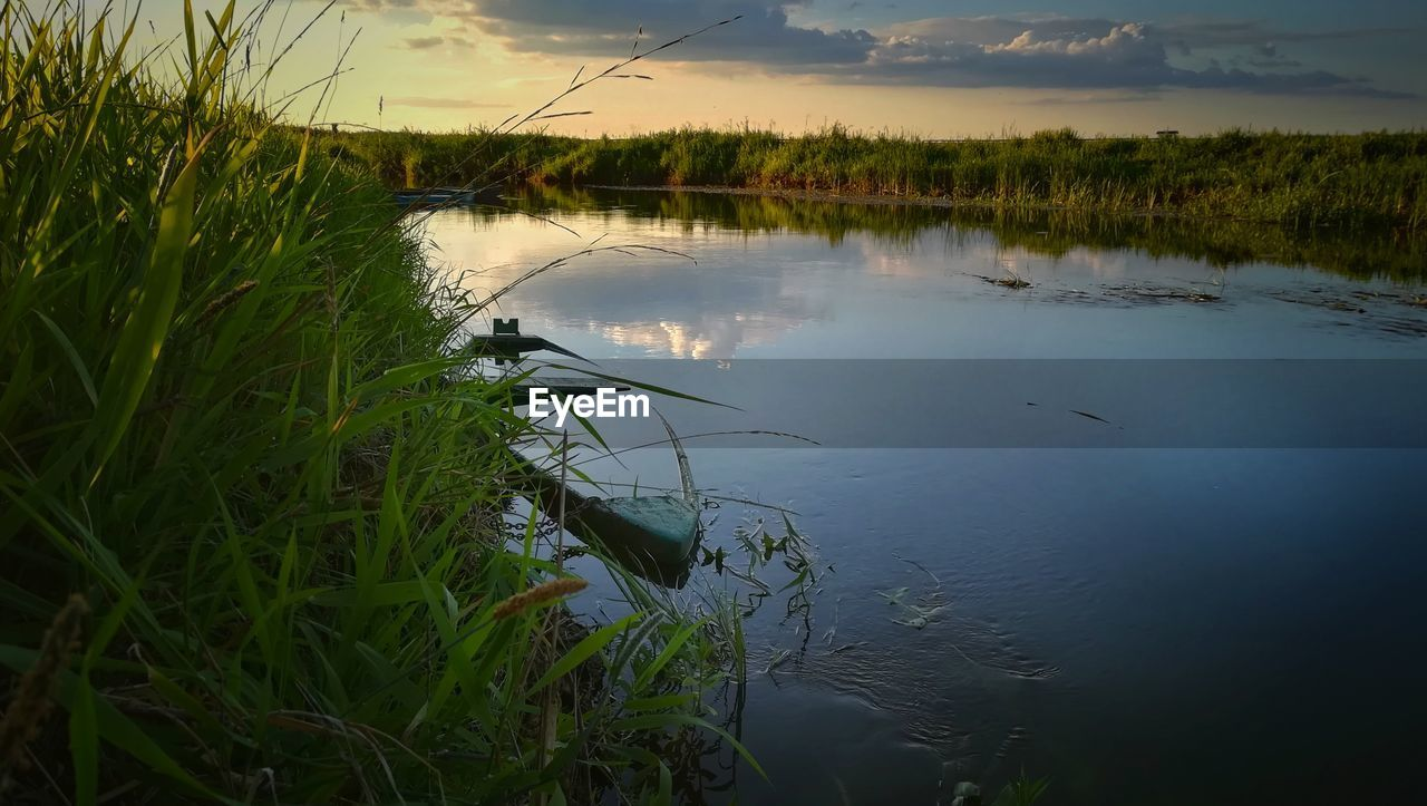 water, plant, lake, beauty in nature, tranquility, reflection, tranquil scene, scenics - nature, nature, sky, cloud - sky, growth, no people, grass, non-urban scene, day, tree, outdoors, animals in the wild