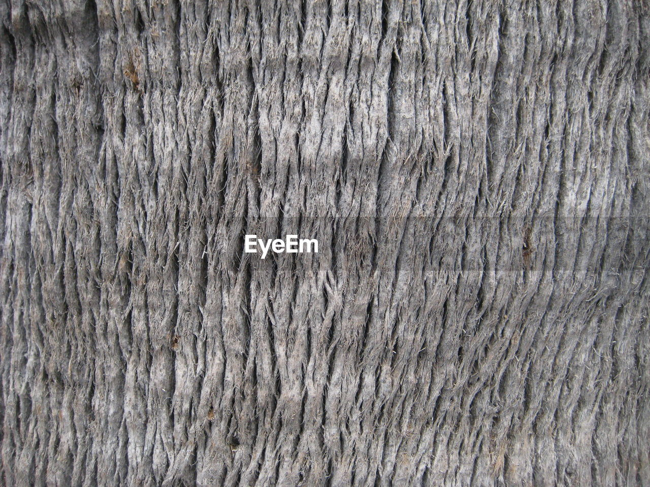 textured, backgrounds, close-up, wood - material, pattern, no people, full frame, gray, textured effect, nature, abstract, wood grain, outdoors, hardwood, day