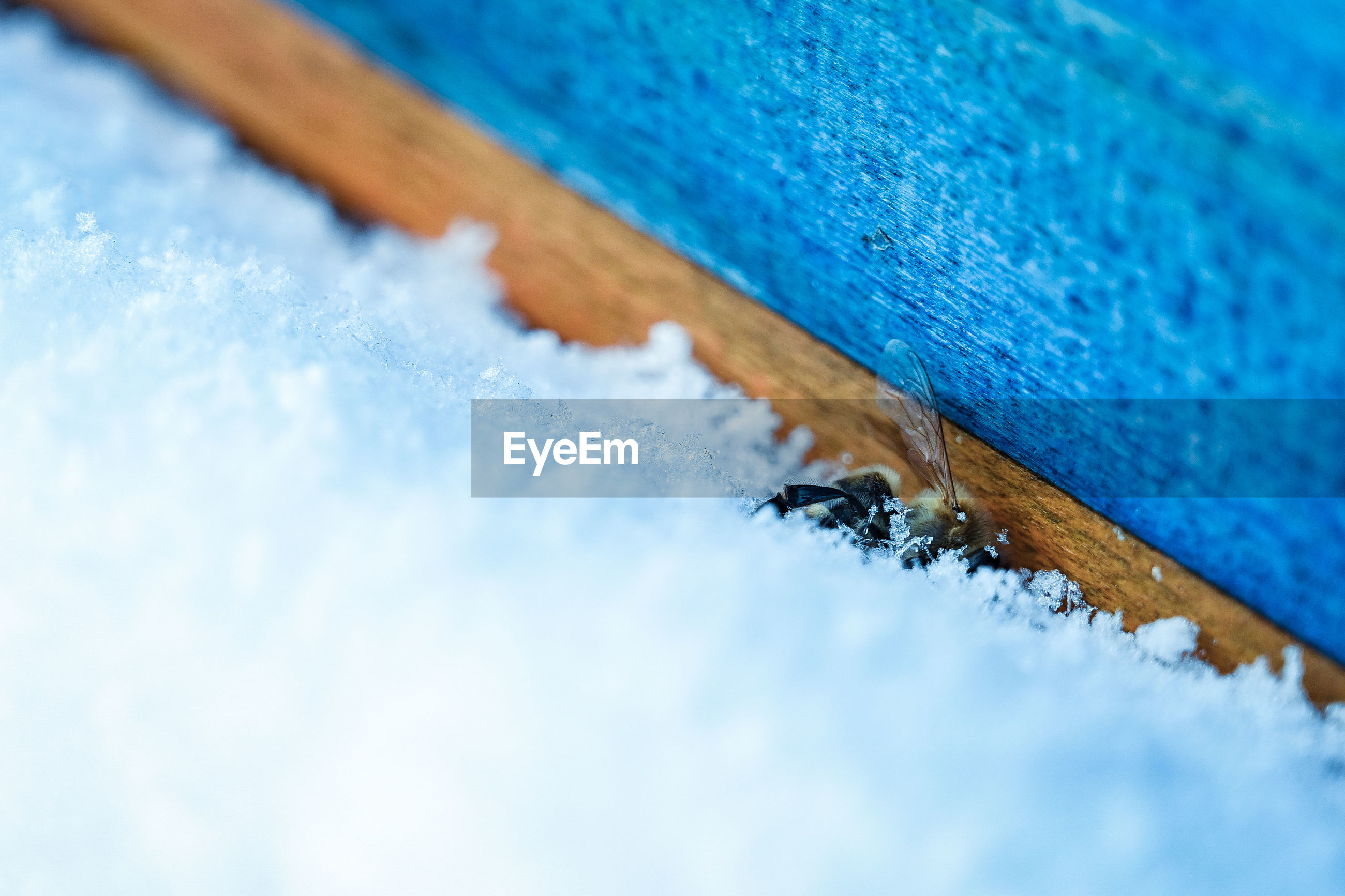High angle view of snow on wood and death bee
