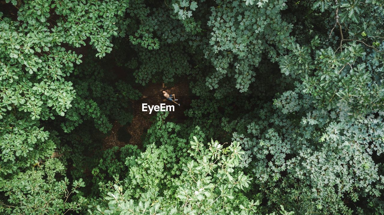 High Angle View Of Man Relaxing On Field Amidst Trees In Forest