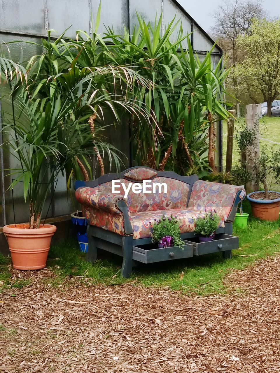 plant, potted plant, growth, front or back yard, absence, leaf, outdoors, day, grass, no people, nature, tree, architecture, greenhouse